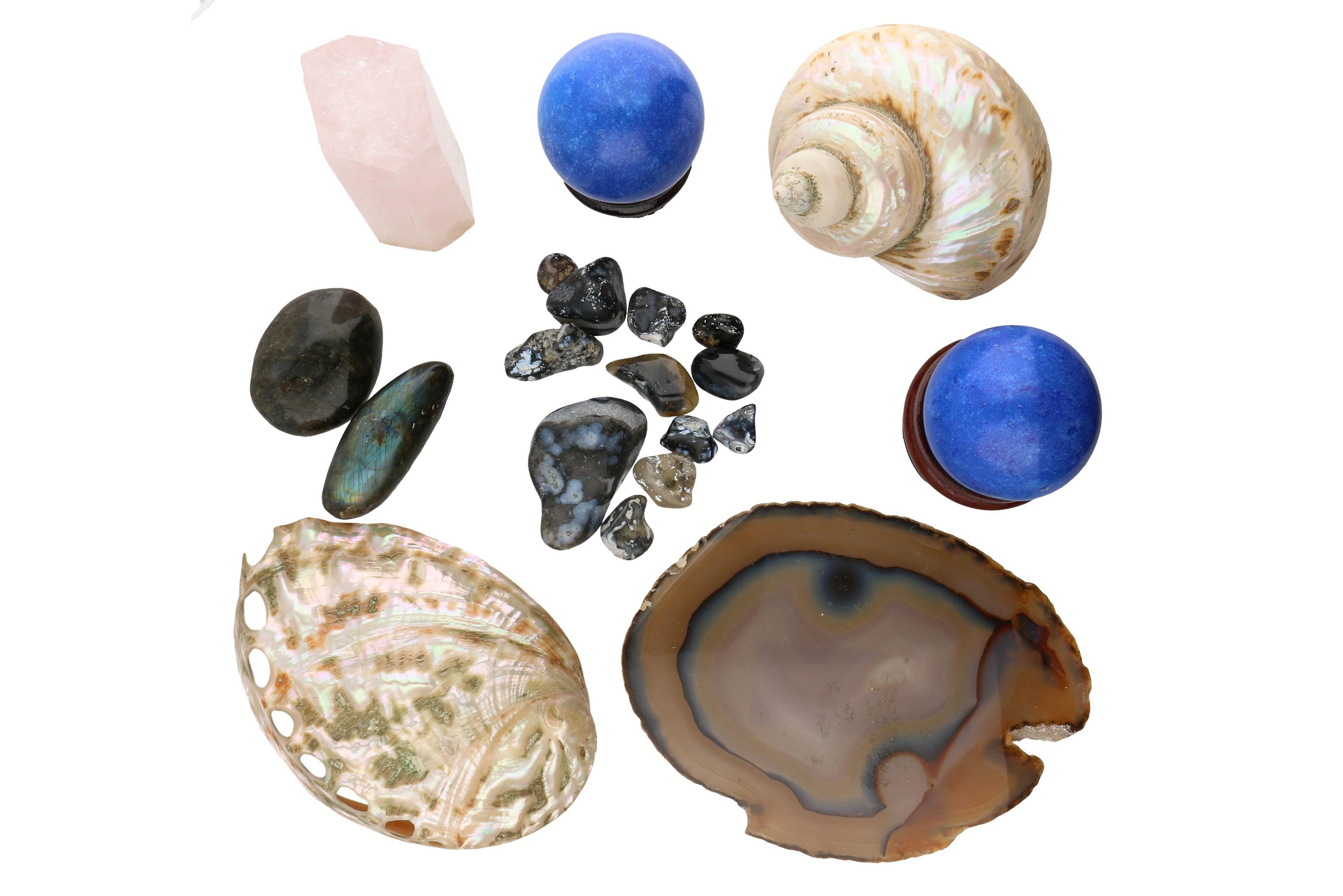 Polished Stones and Mollusk Shells