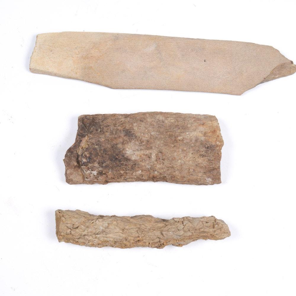 Fossil Specimens