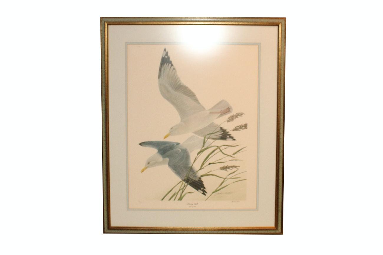 "John Ruthven Limited Edition Offset Lithograph ""Herring Gulls"""
