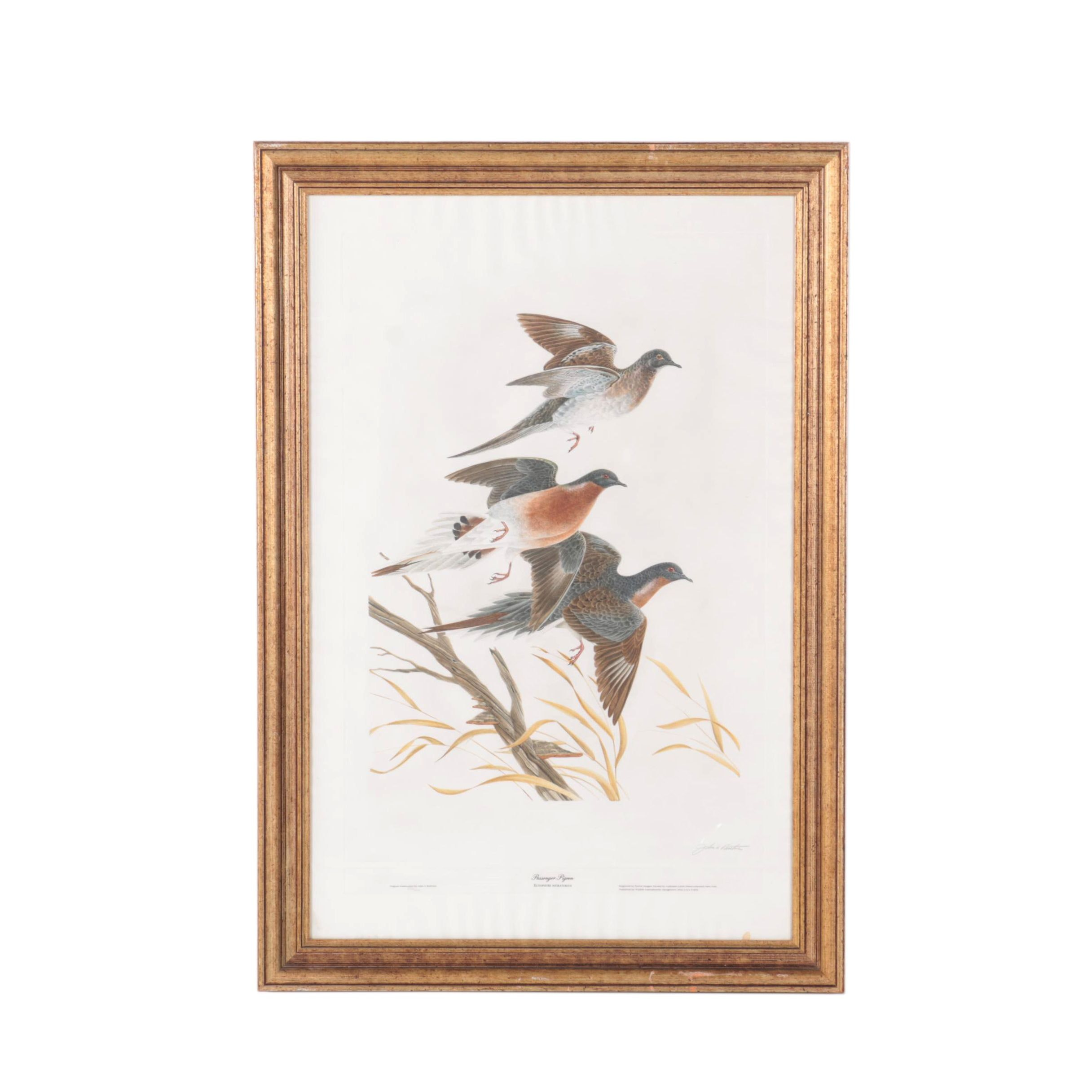 "Norma Morgan Limited Edition Hand Colored Aquatint on Paper After John A. Ruthven's ""Passenger Pigeon"""