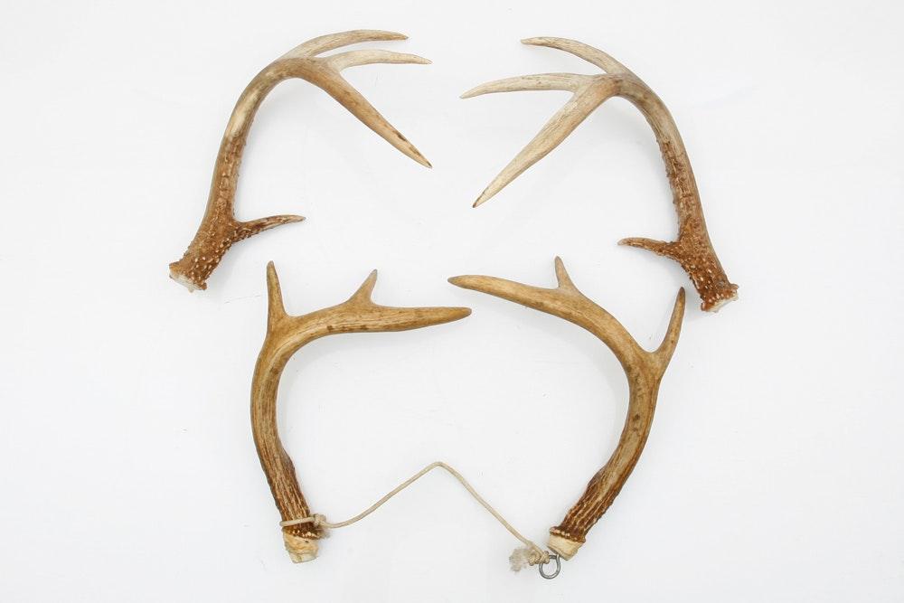 Four Deer Antlers