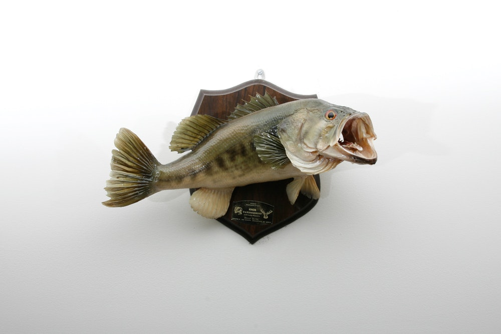 Mounted Taxidermy Largemouth Bass