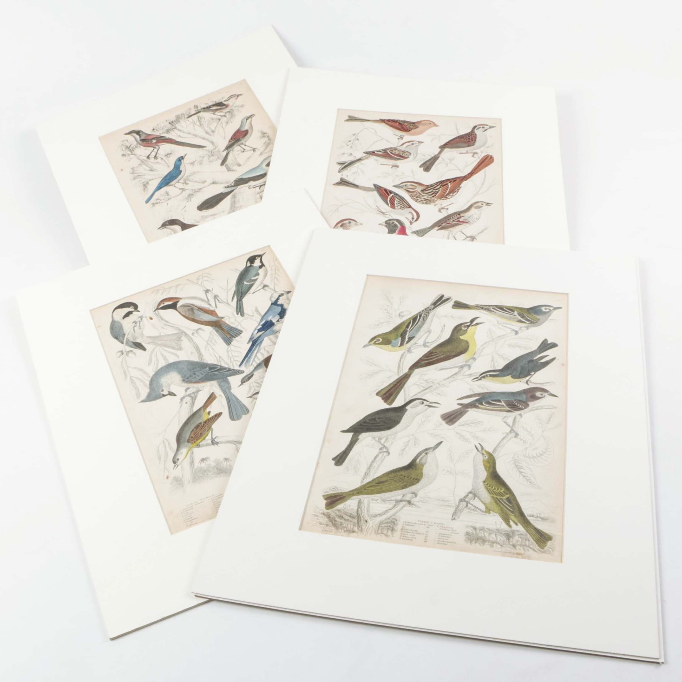 Matted Hand Colored Engravings on Paper of Birds