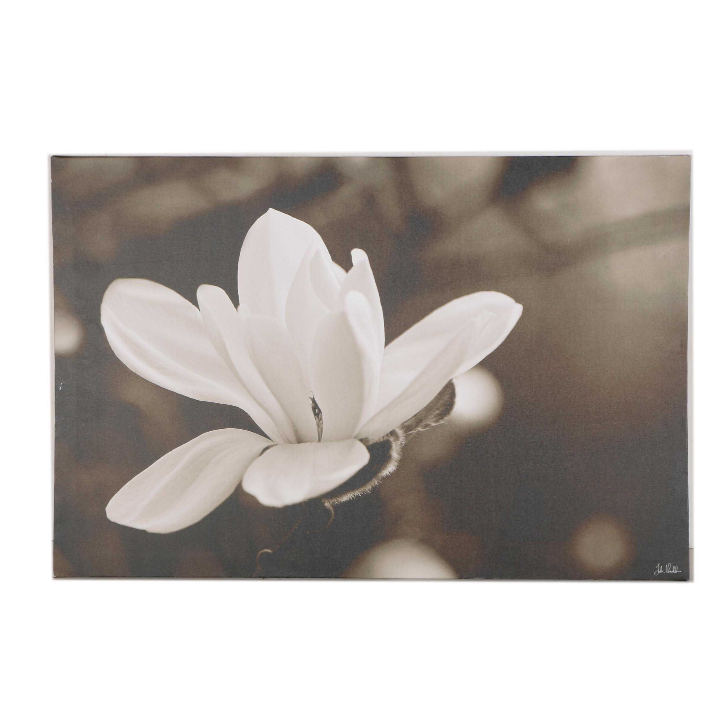 Giclee on Canvas of Magnolia Blossom