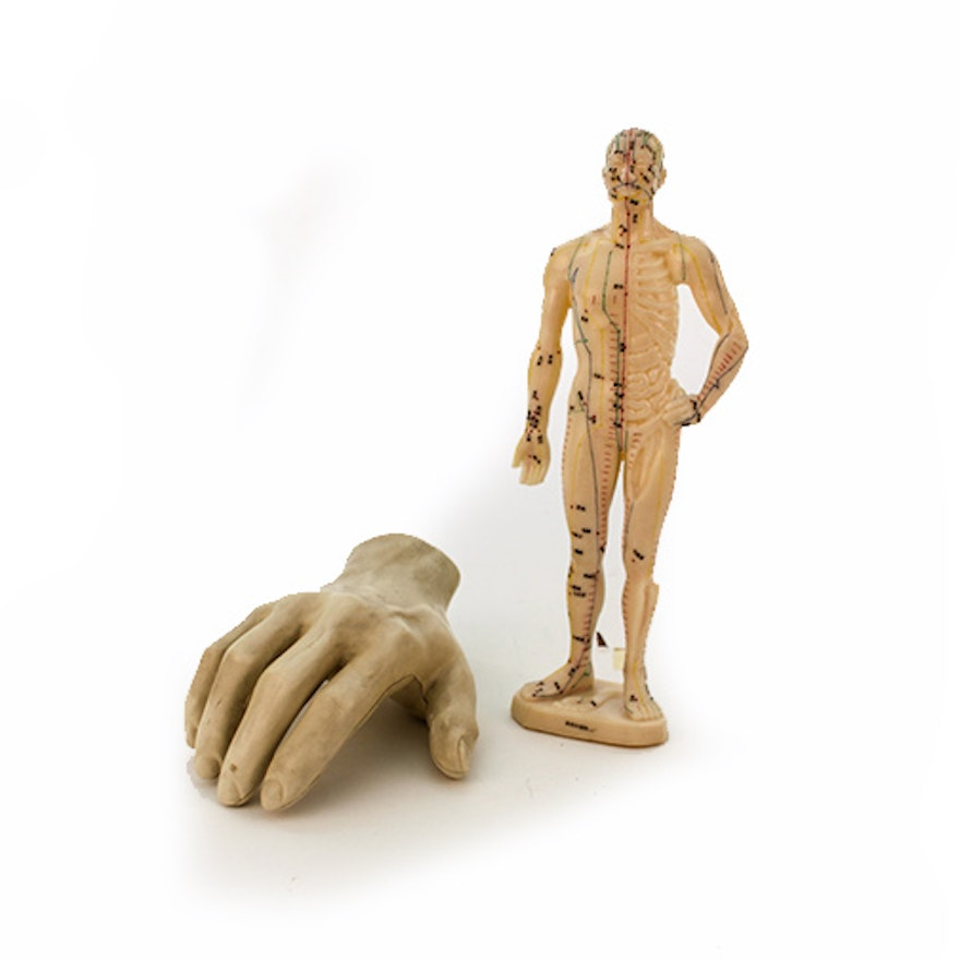 Human Hand Anatomy Model And Chinese Acupuncture Model Ebth