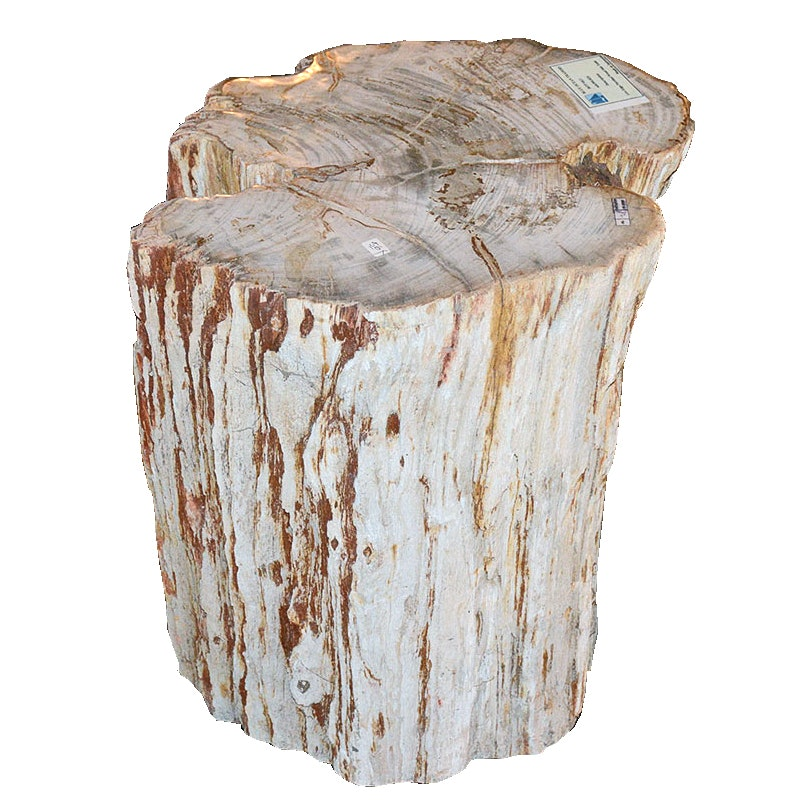 blue ocean traders petrified wood side table : ebth