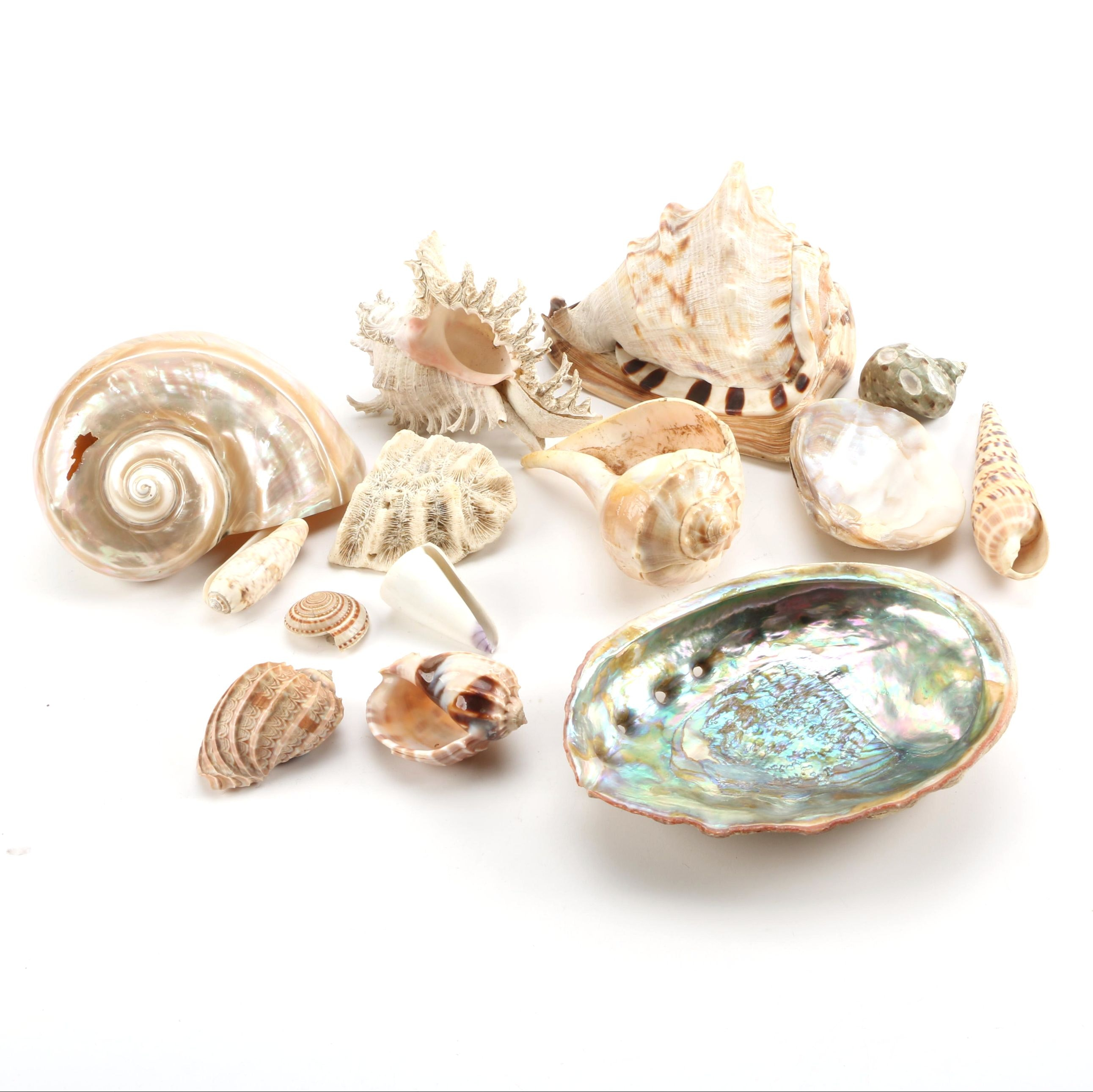 Recent Seashells and Coral