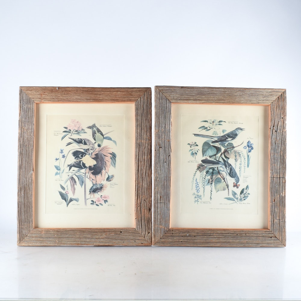 Framed Offset Lithographs of Birds after Arthur Singer