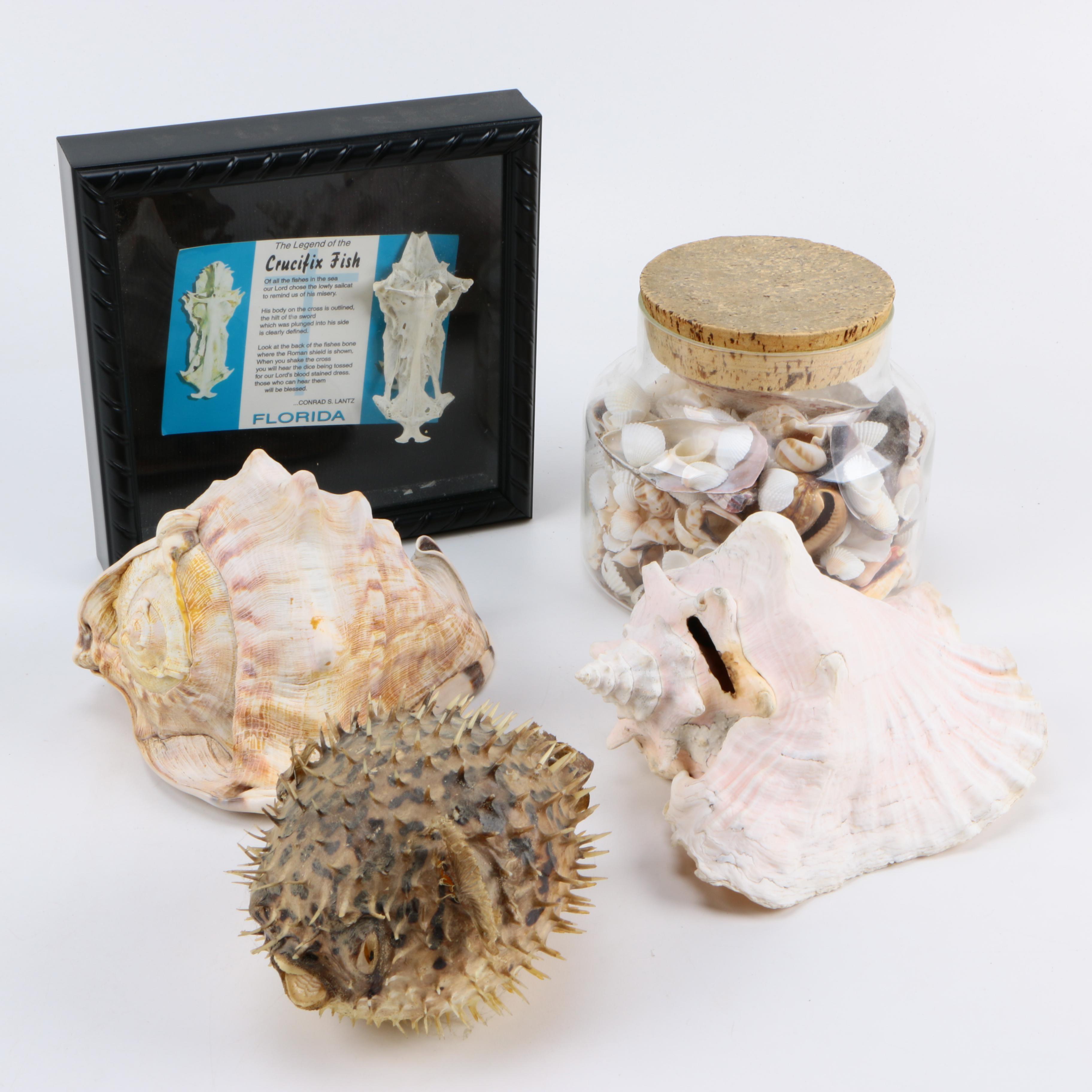 Recent Marine Fossils