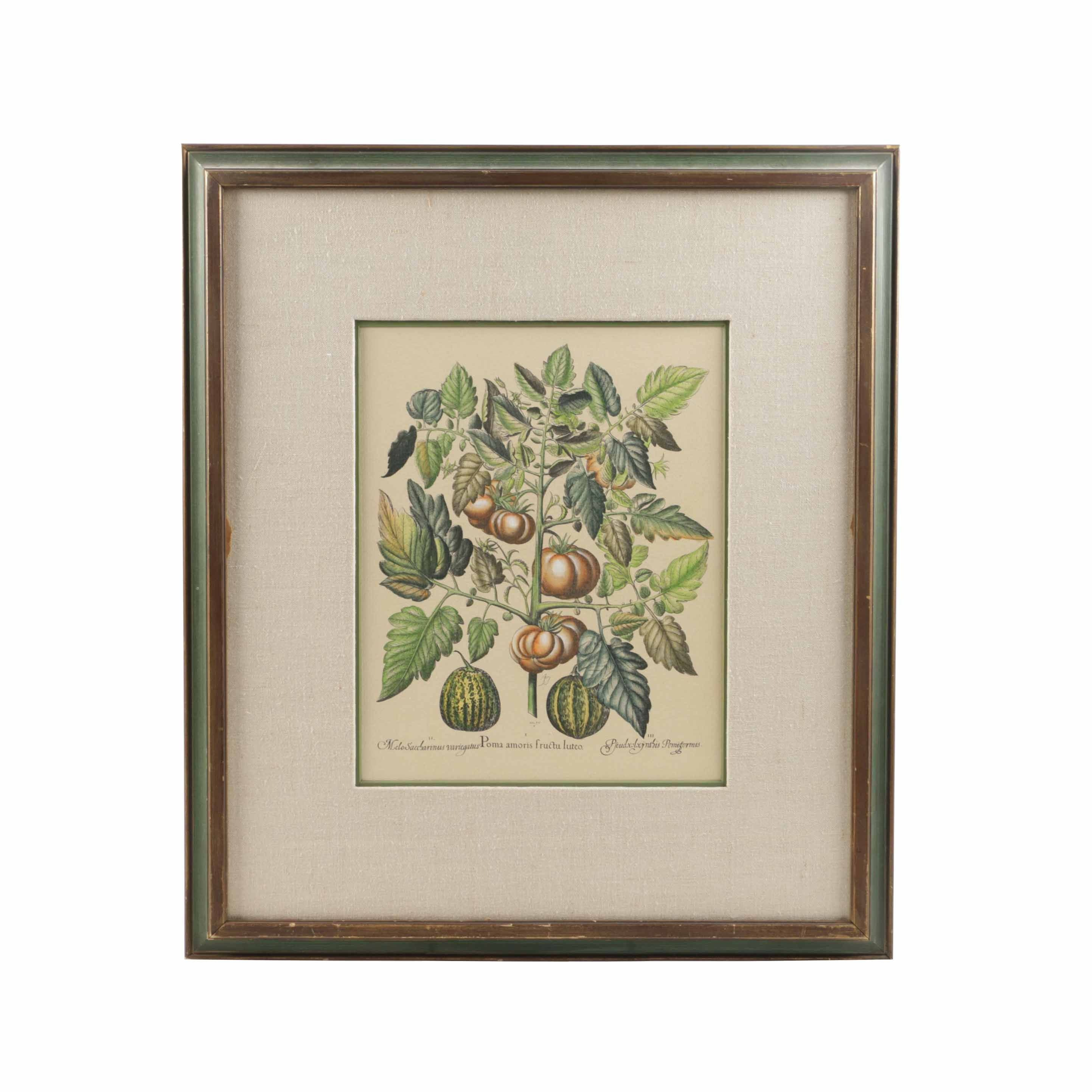 After Basilius Besler Hand-colored Restrike Engraving on Paper of Fruit and Flowers