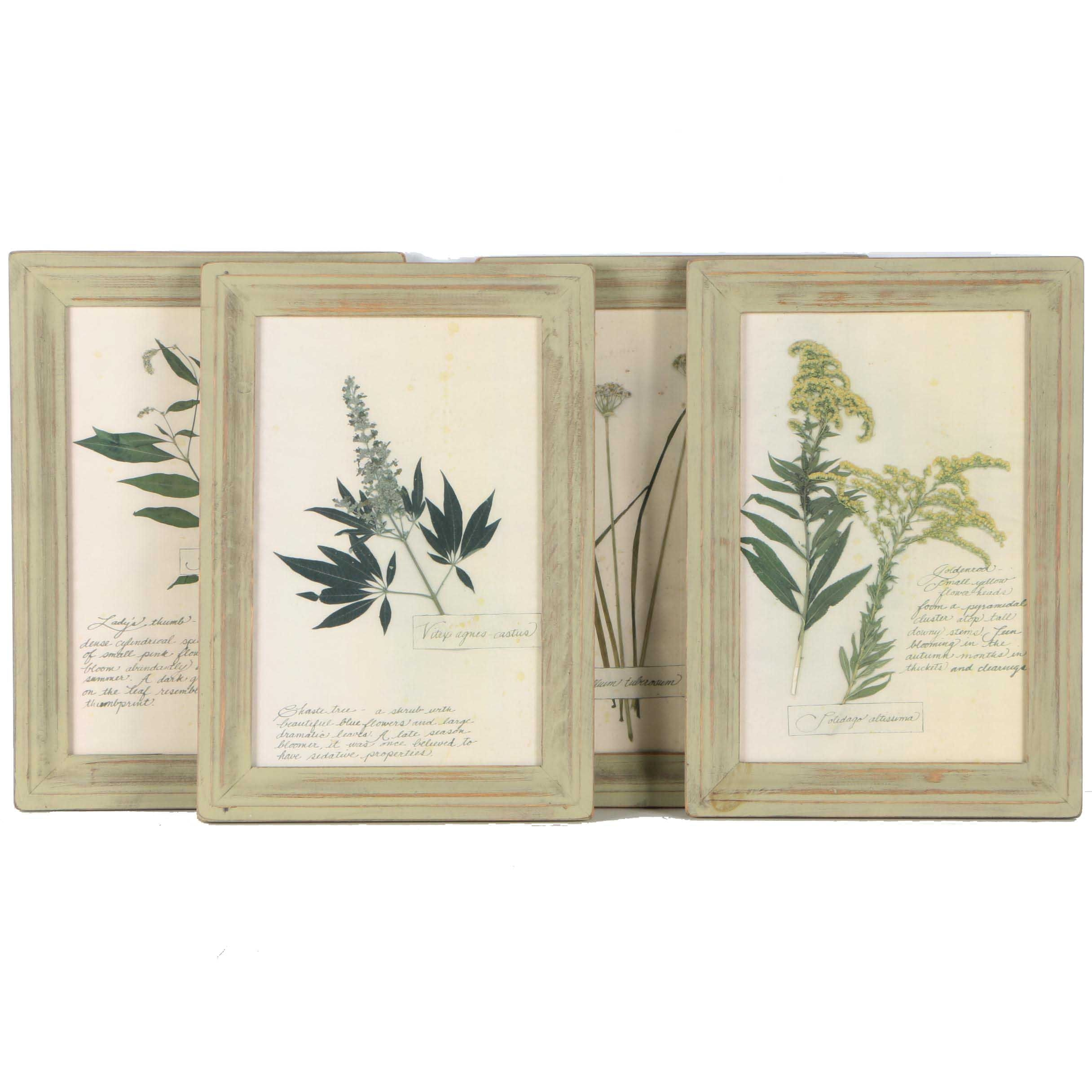 Four Offset Lithographs on Paper After Pressed Plants