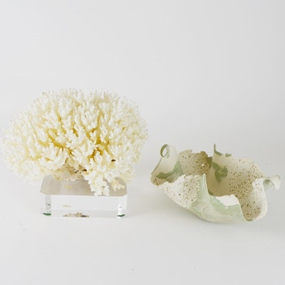 Scleractinian Coral and Pottery Bowl