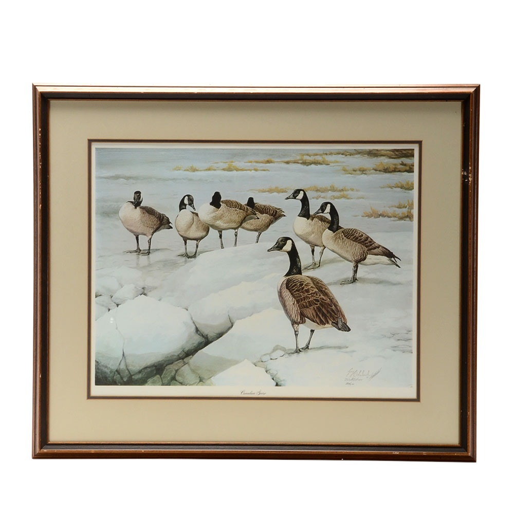 "Guy Coheleach Signed Limited Edition Offset Lithograph ""Canadian Geese"""