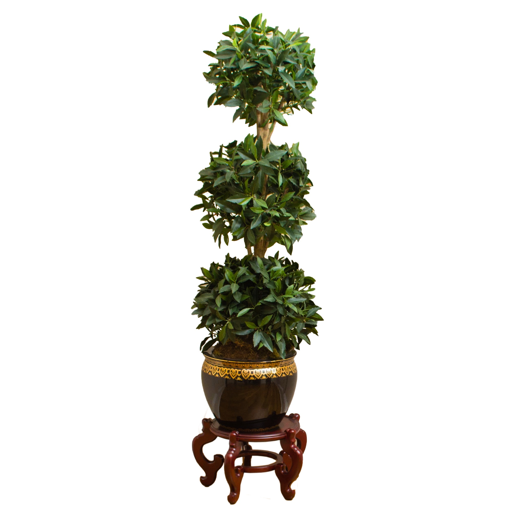 Anthemion Decorated Porcelain Planter with Faux Ficus Topiary on Stand