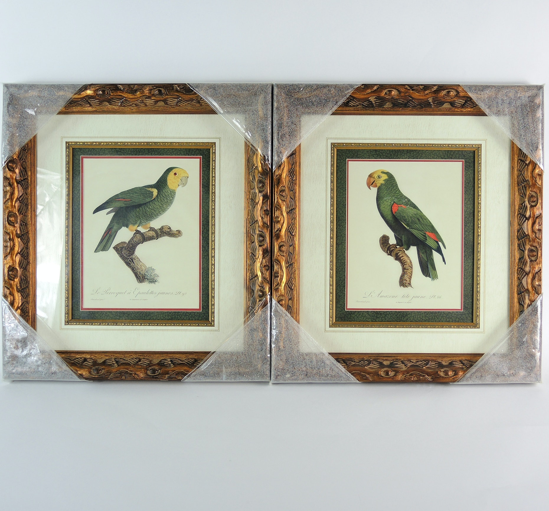 Framed Prints of Antique Scientific Parrot Illustrations