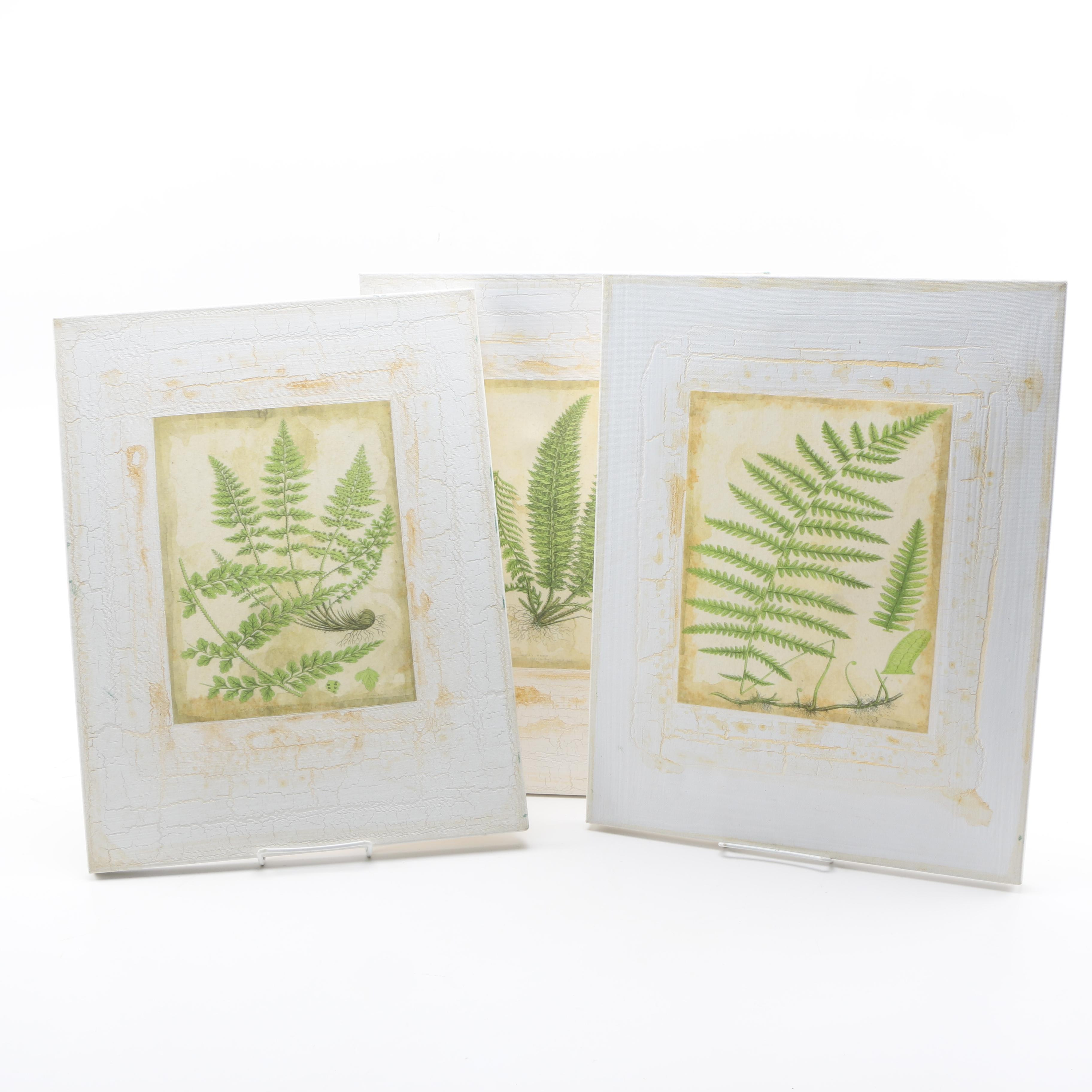 Decorative Vintage Style Giclee Prints on Paper Mounted on Canvas of Fern Fronds