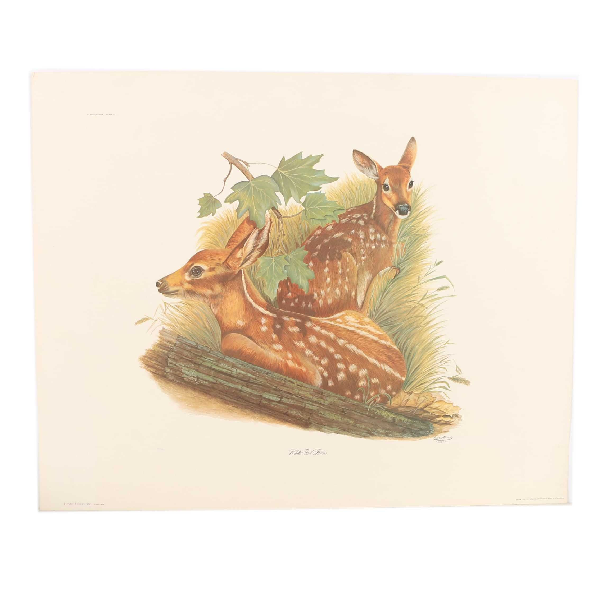 """After E.D. Williams Offset Lithograph """"White Tail Fawns"""""""