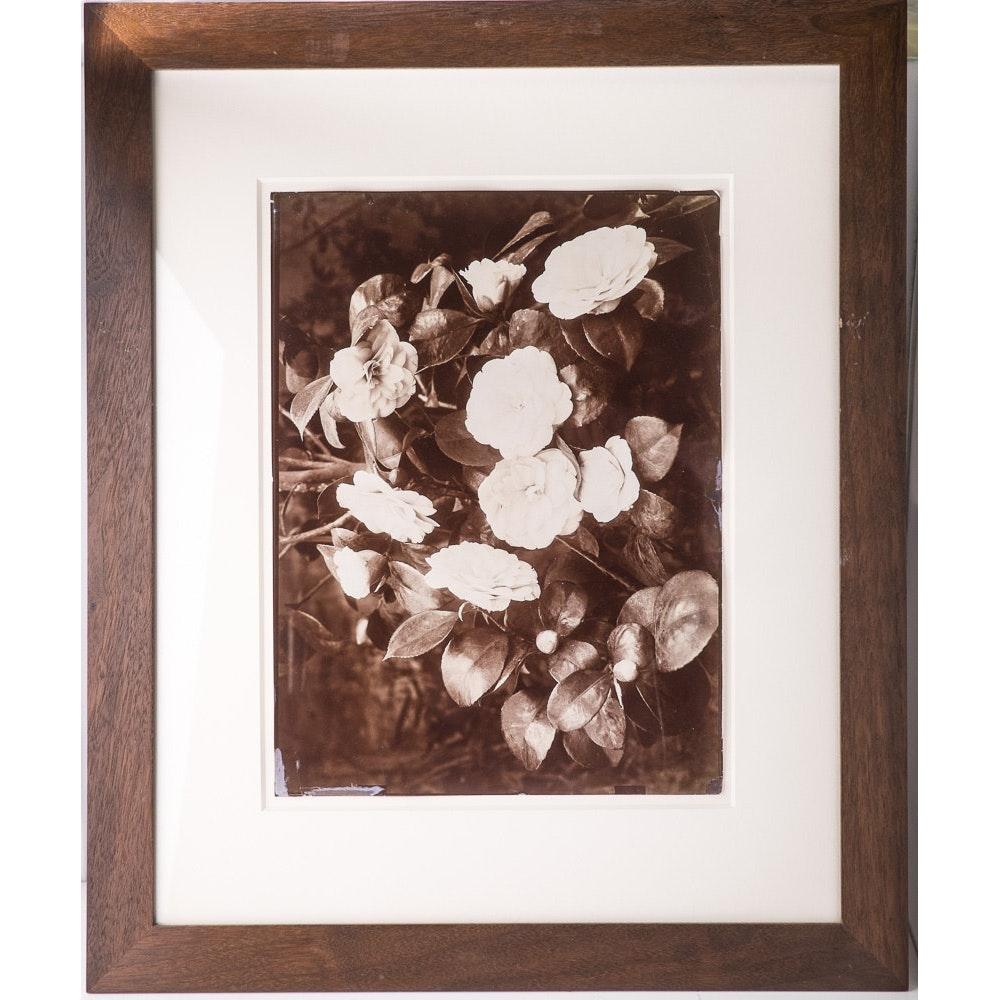 Imperial Plate Albumen Botanical #1