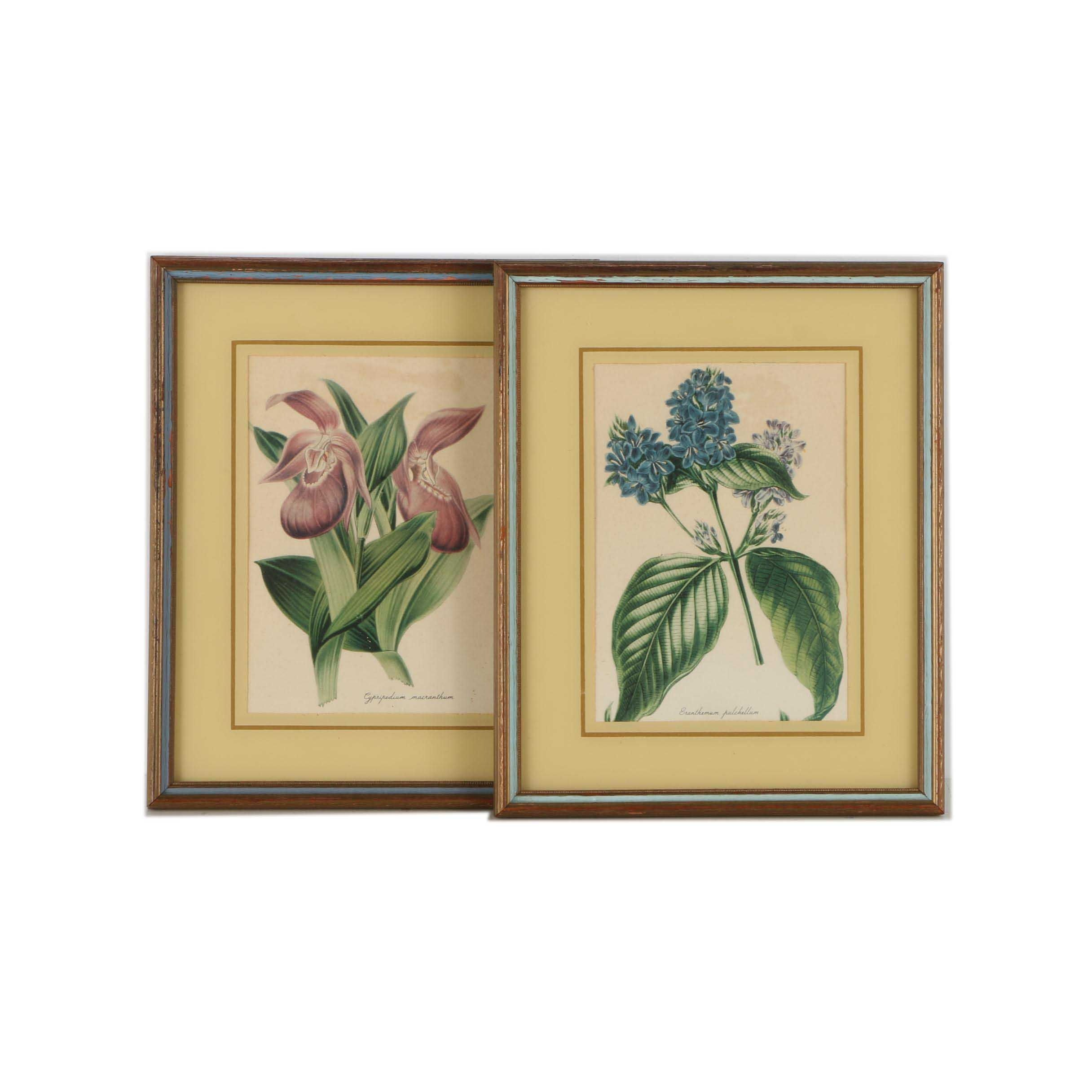 Offset Lithograph Botanical Prints