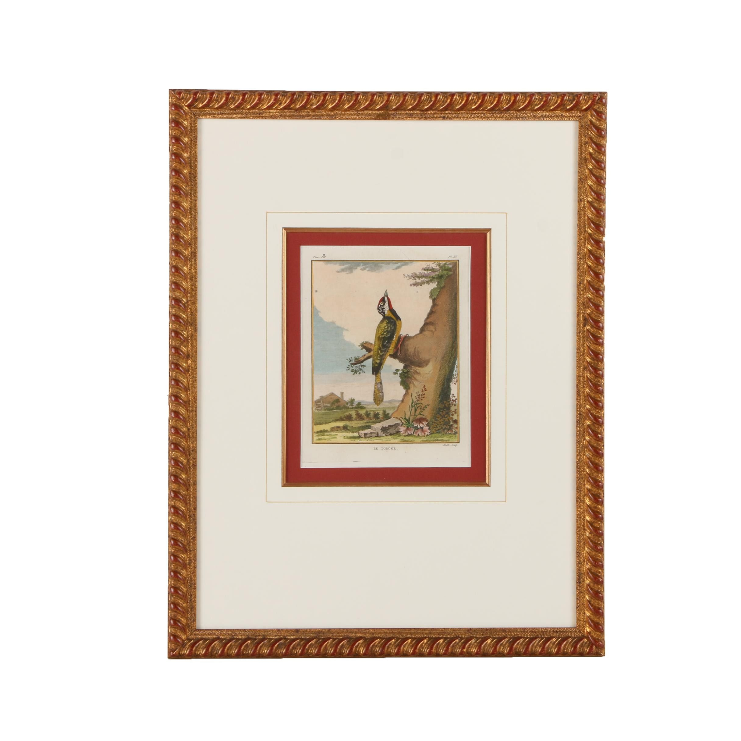 """Hand Colored Engraving on Paper """"Le Torcol"""""""