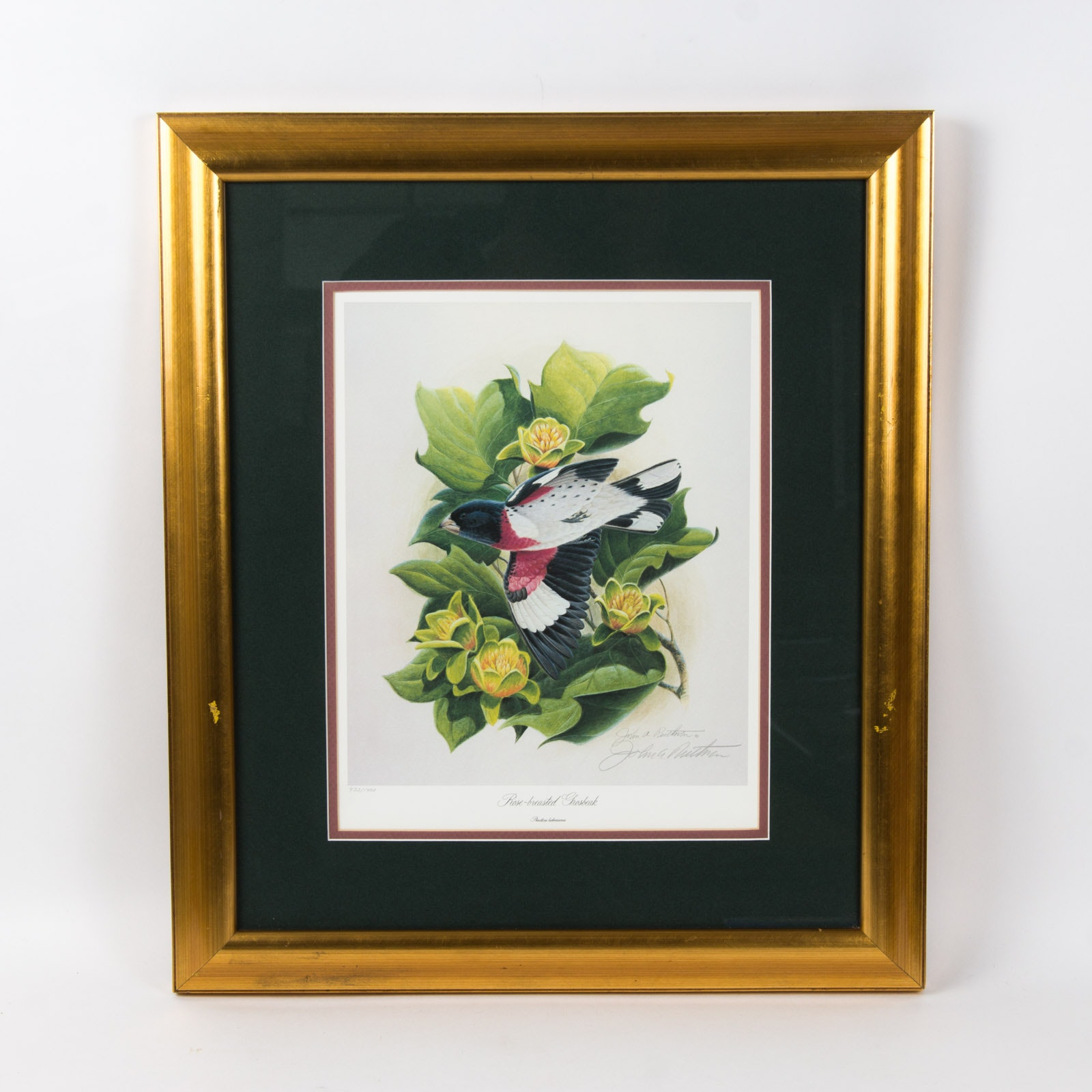 """John A. Ruthven  Limited Edition Offset Lithograph """"Rose Breasted Grosbeak"""""""