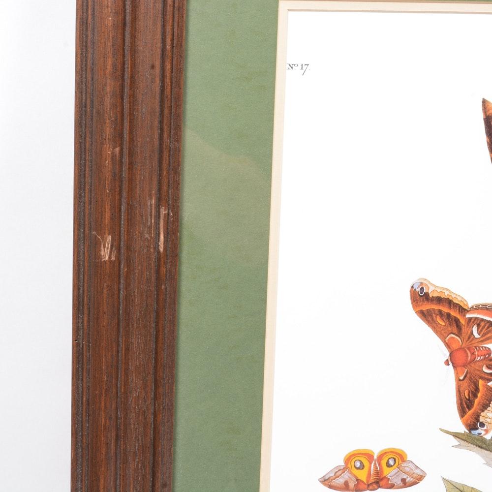 Offset Lithograph Reproduction After John Audubon S Quot Whip