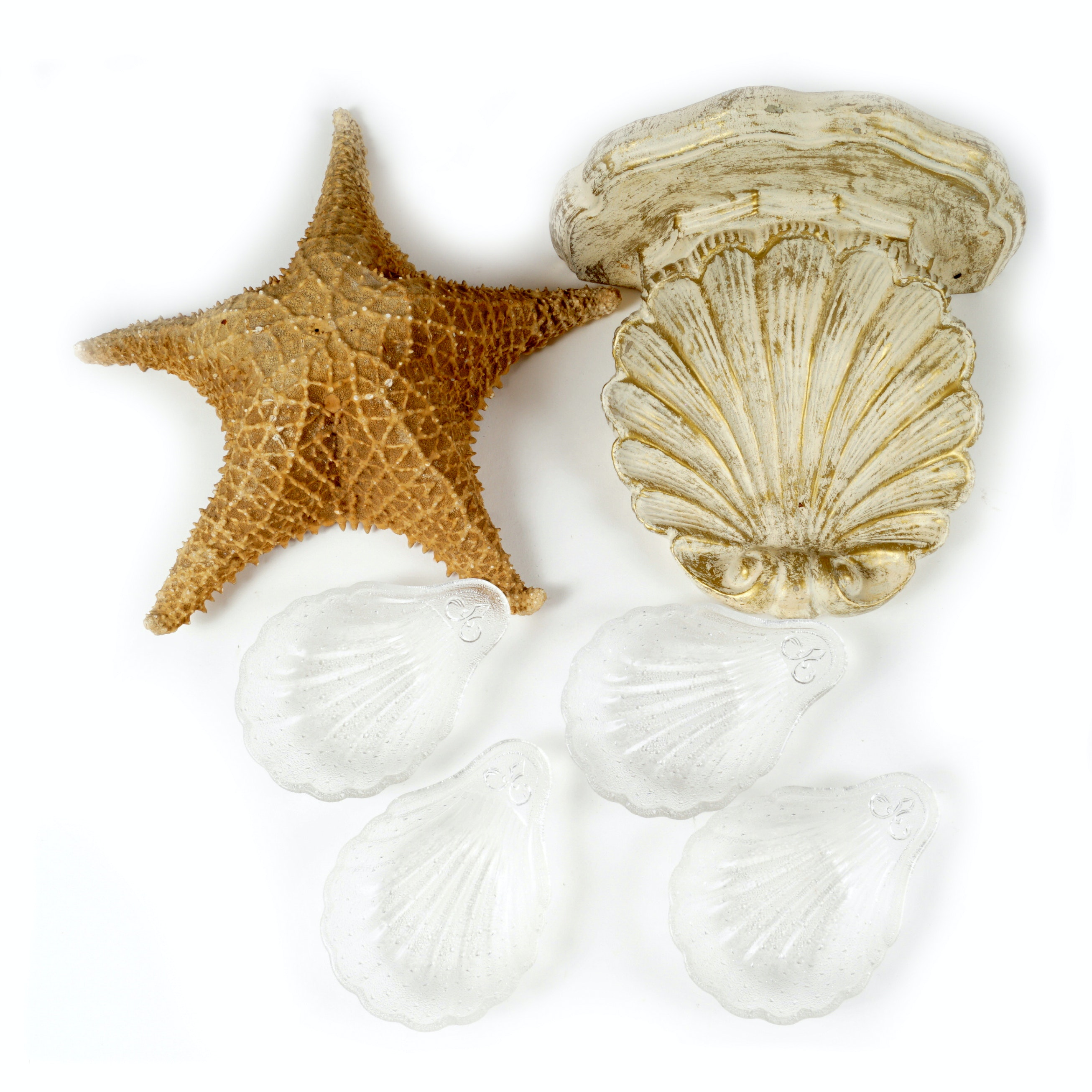 Shell and Sea Creature Decor
