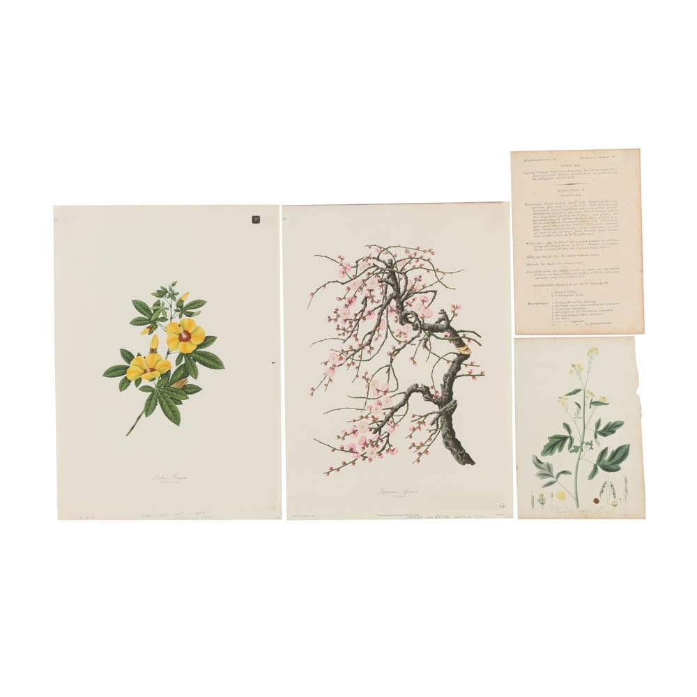 Collection of Botanical Prints on Paper