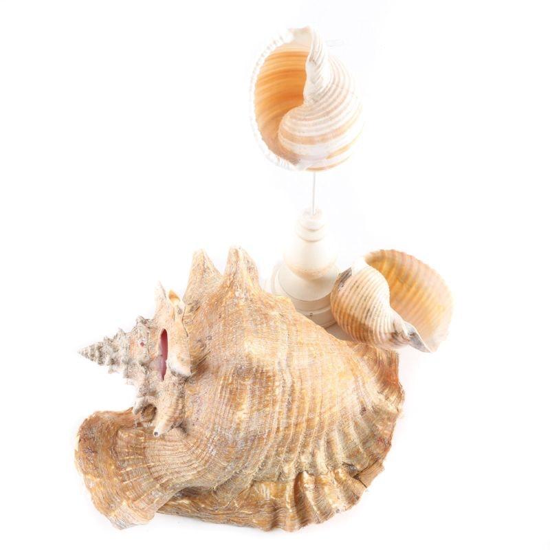 Group of Seashells