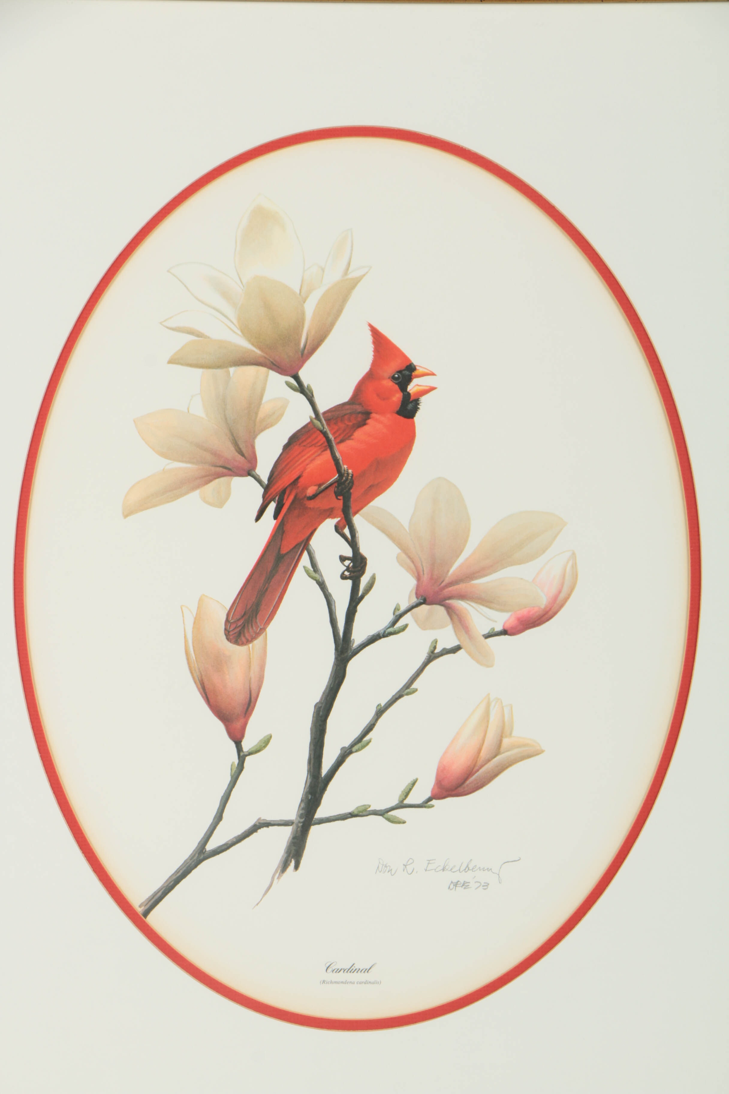Don R Eckelberry Signed Offset Lithograph Quot Cardinal Quot Ebth