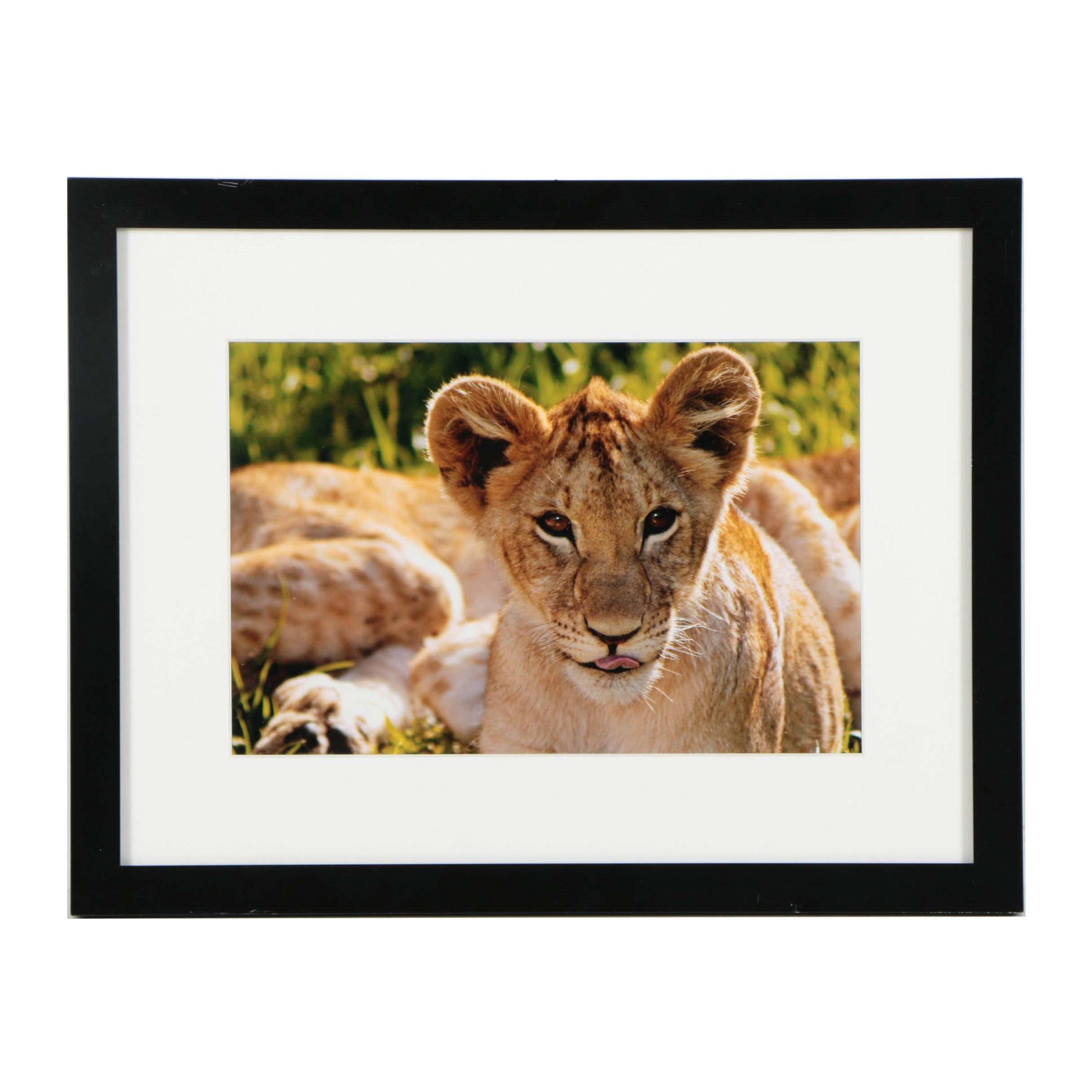"Edwin Behrens Digital Photograph on Paper ""Lion Cub"""