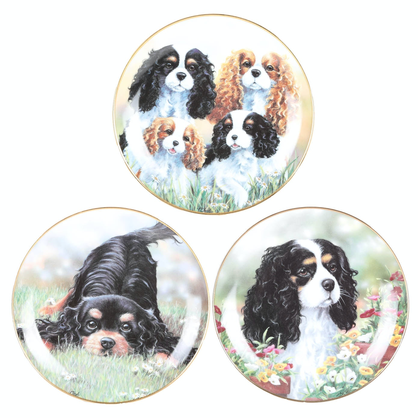 Caviler King Charles Spaniel Collectible Plates