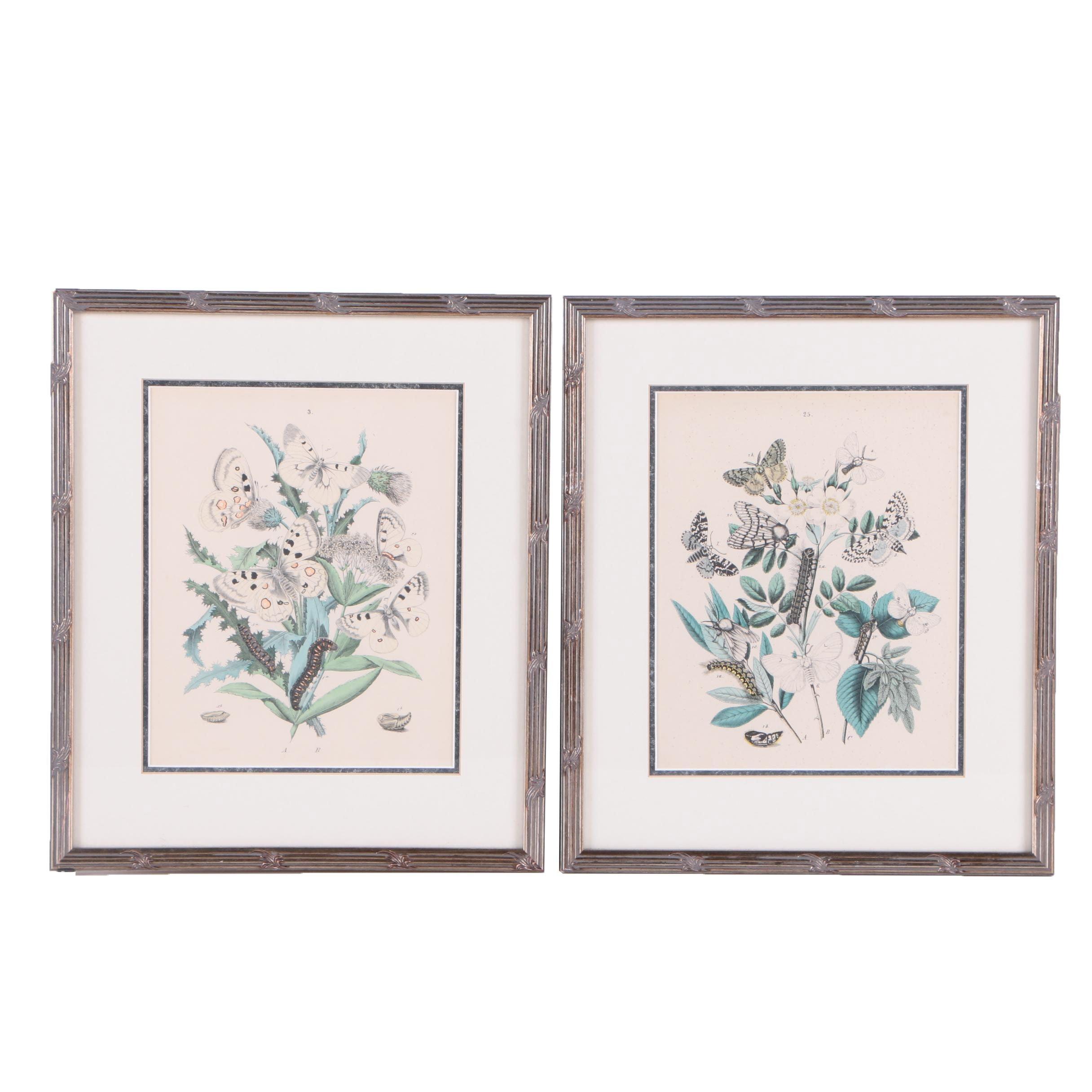 Pair of Hand-Colored Wood Engravings on Paper of Moths