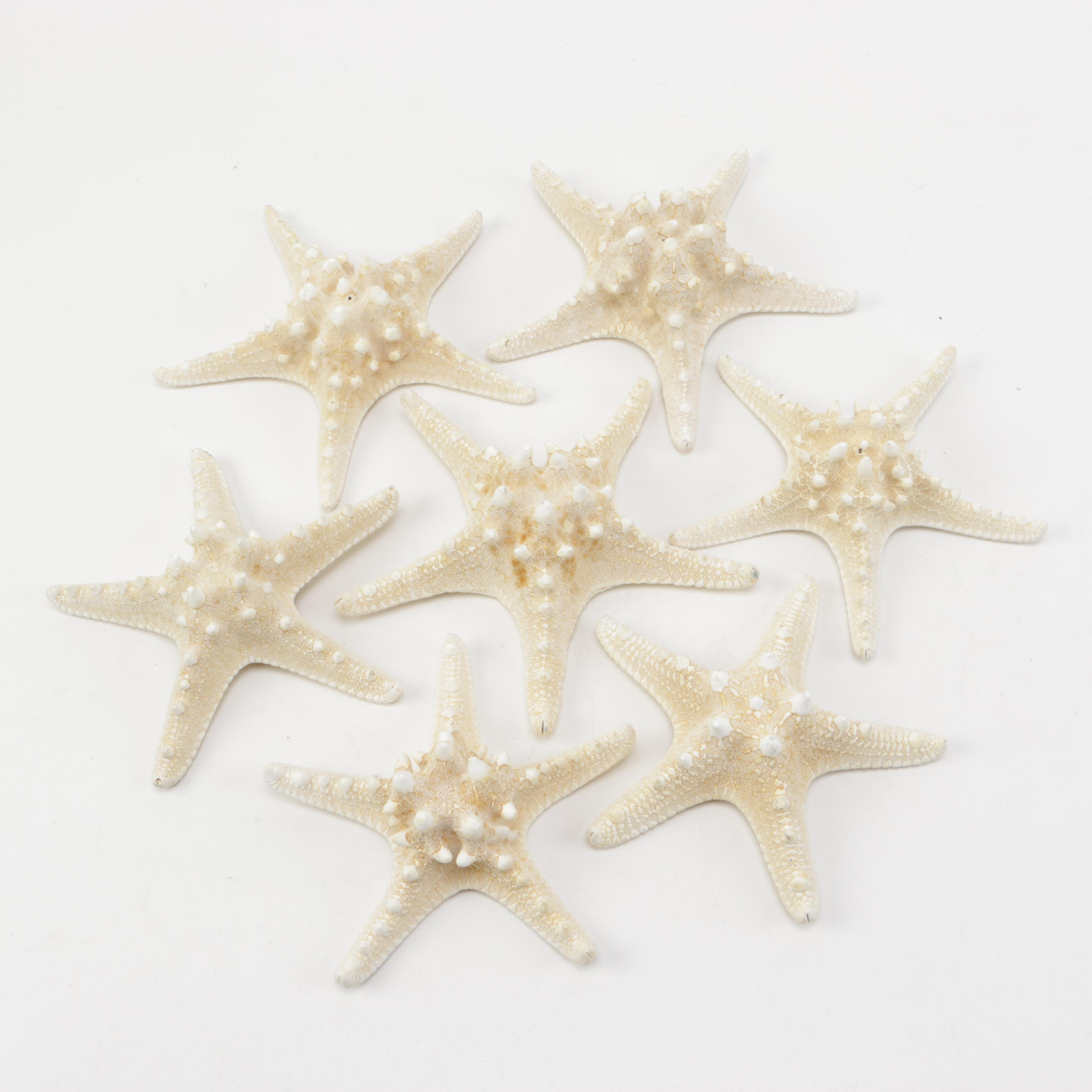 Recent Starfish Specimens