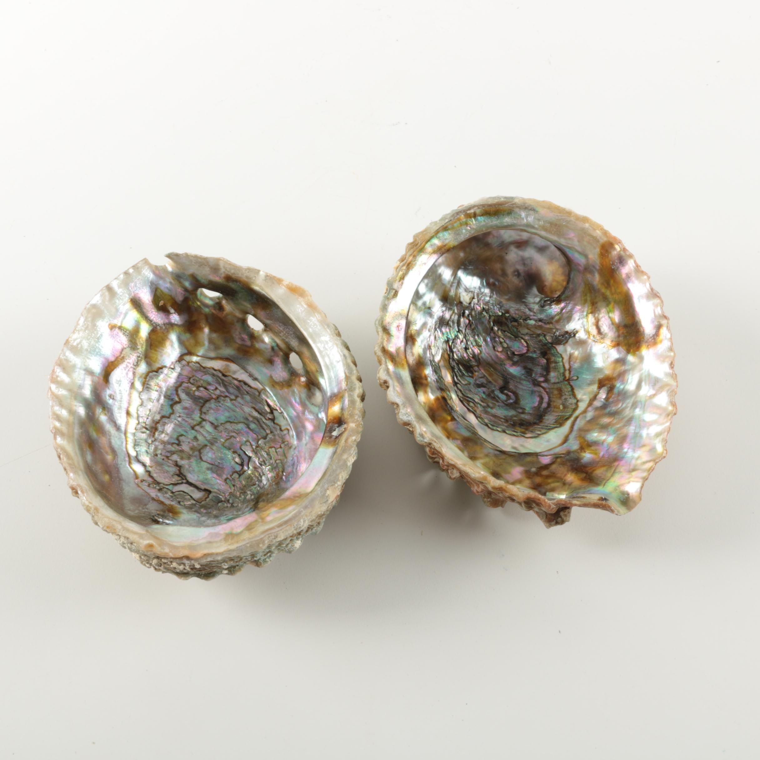 Recent Abalone Shells
