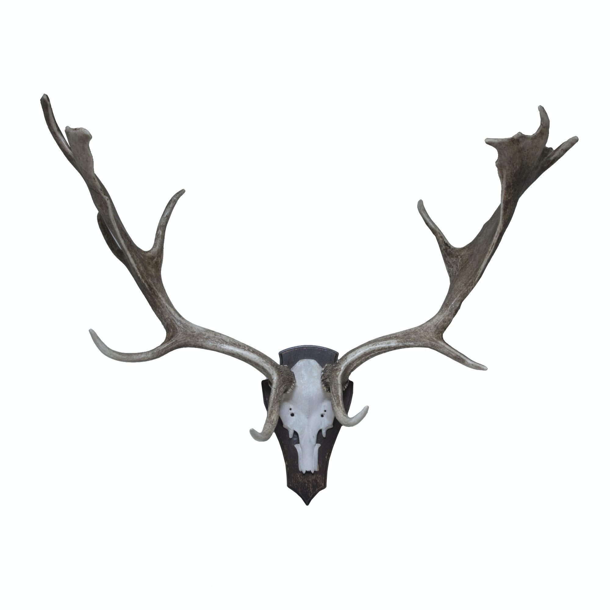 Mounted Fallow Deer Antlers
