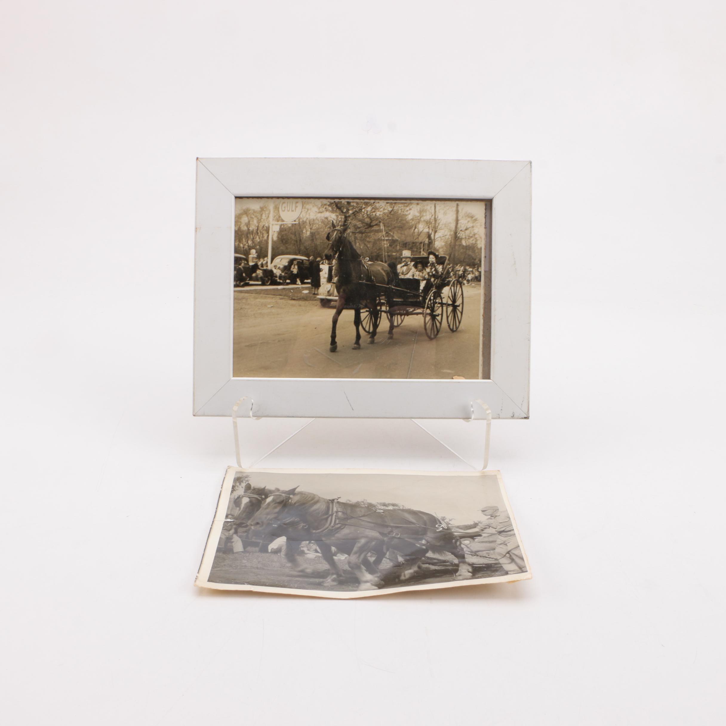 Photographs of Horses