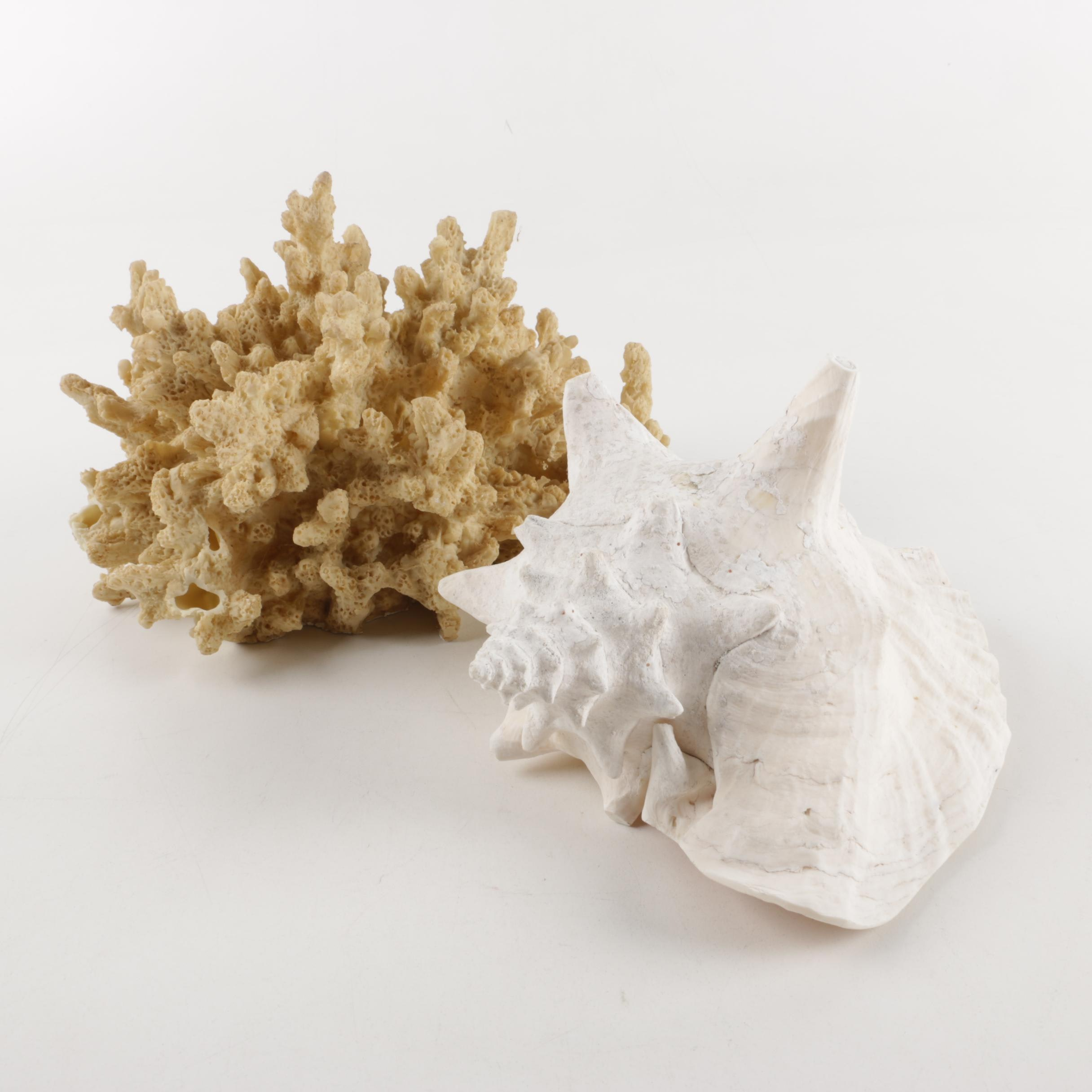 Decorative Porcelain Coral and Shell Sculptures