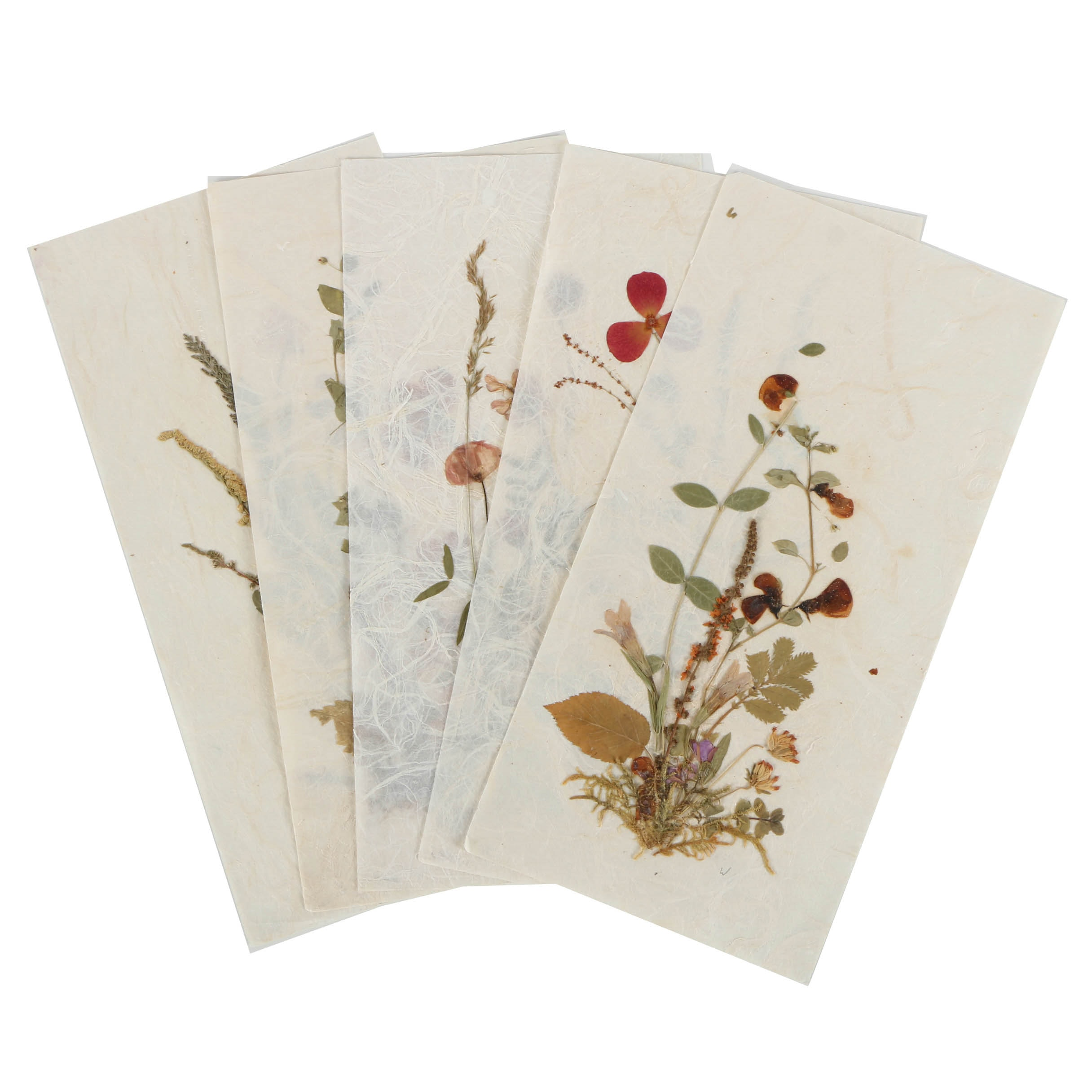 Collection of Pressed Flower Assemblages on Wove Paper