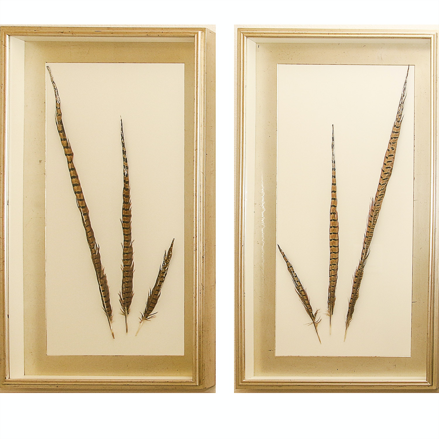 Framed Black and Brown Feathers