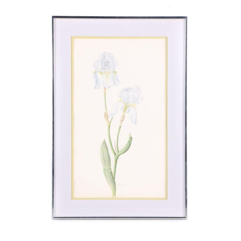 "Marjorie Powell Pastel Drawing on Paper ""Iris"""