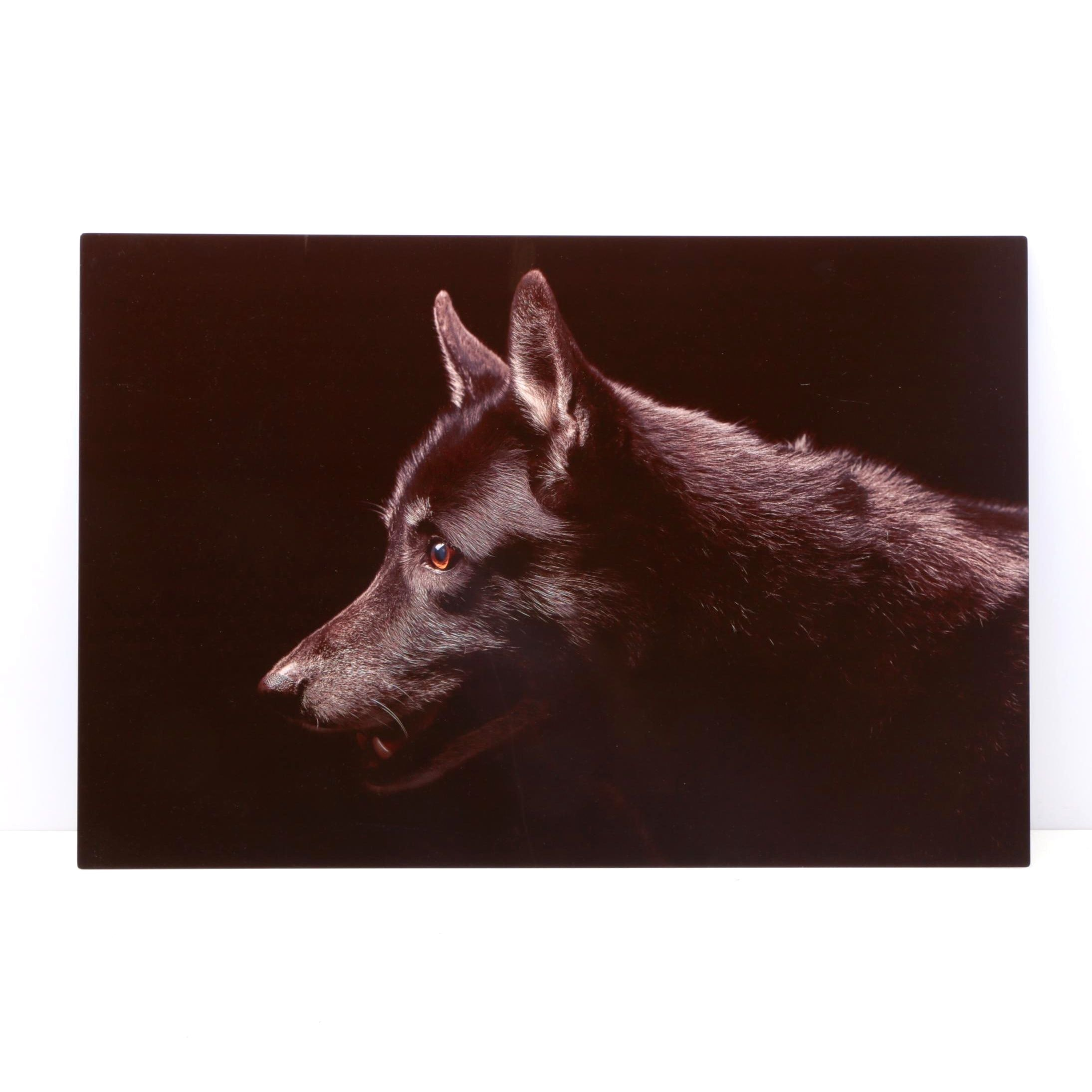 Giclee Print on Aluminum of a Dog