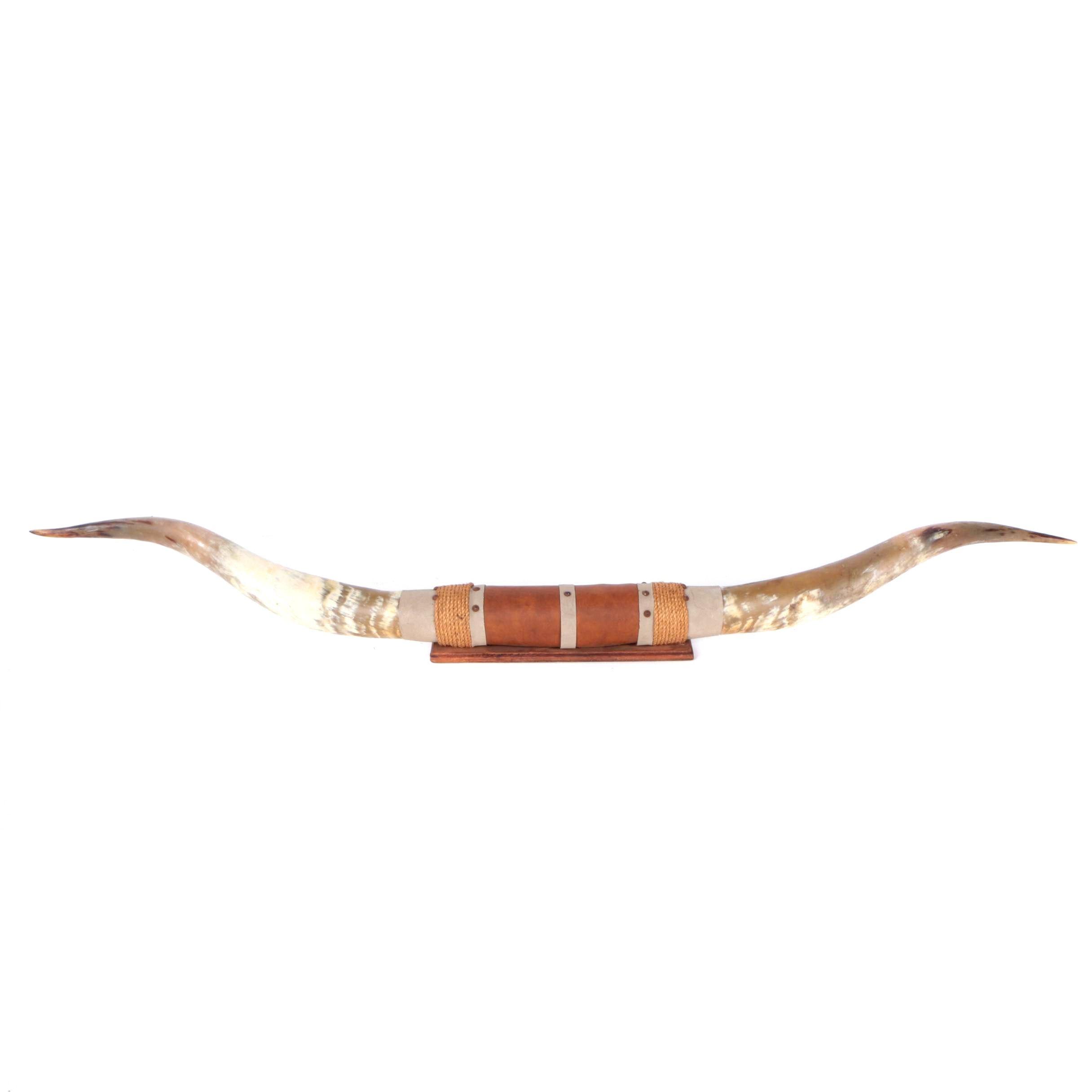 Mounted Longhorn Steer Horns