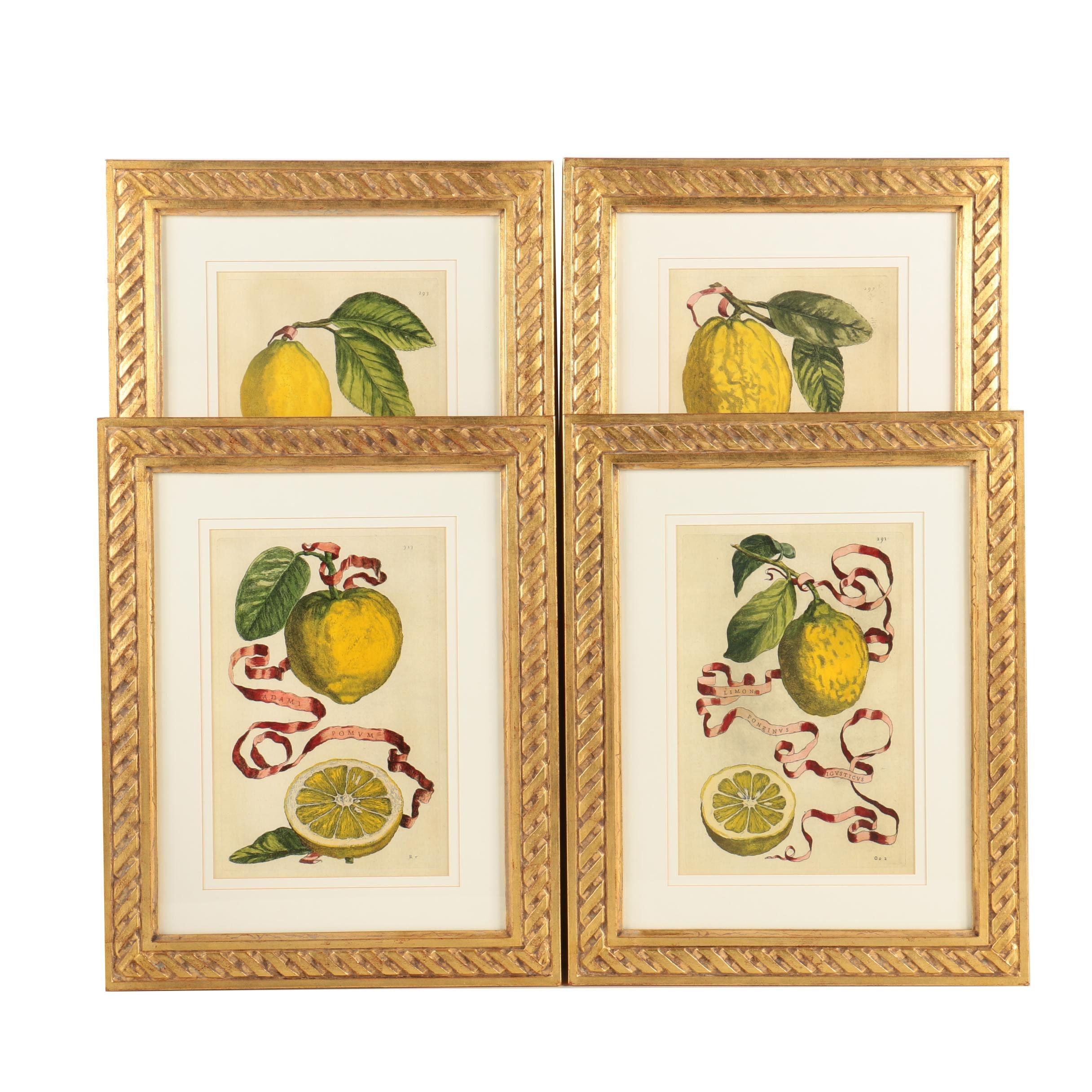 Four Giclee Prints of Lemons