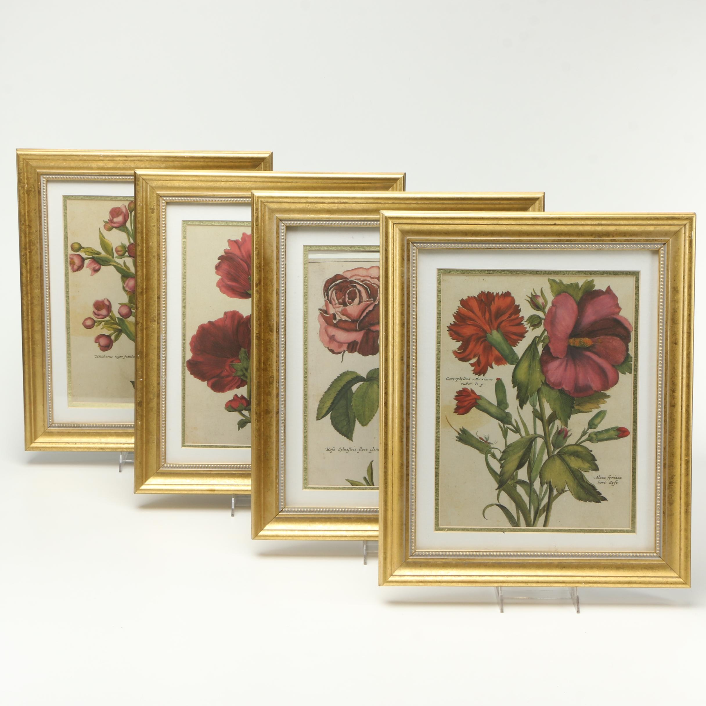 Offset Lithographs on Paper of Botanicals