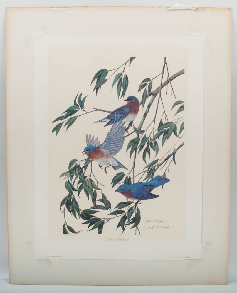 """Signed John Ruthven Limited Edition Offset Lithograph """"Eastern Bluebirds"""""""