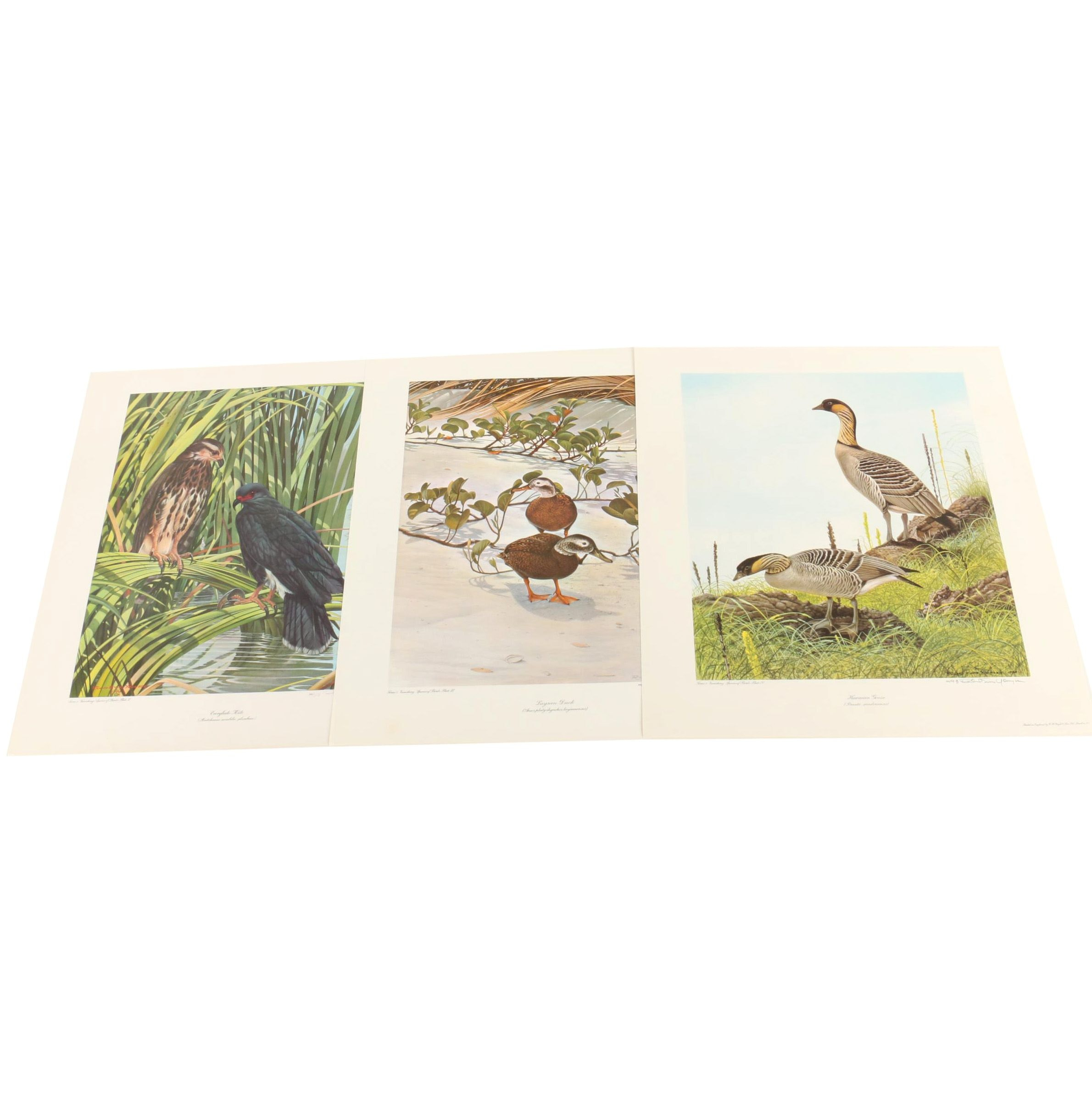 Richard Evans Younger Limited Edition Reproduction Prints of Birds
