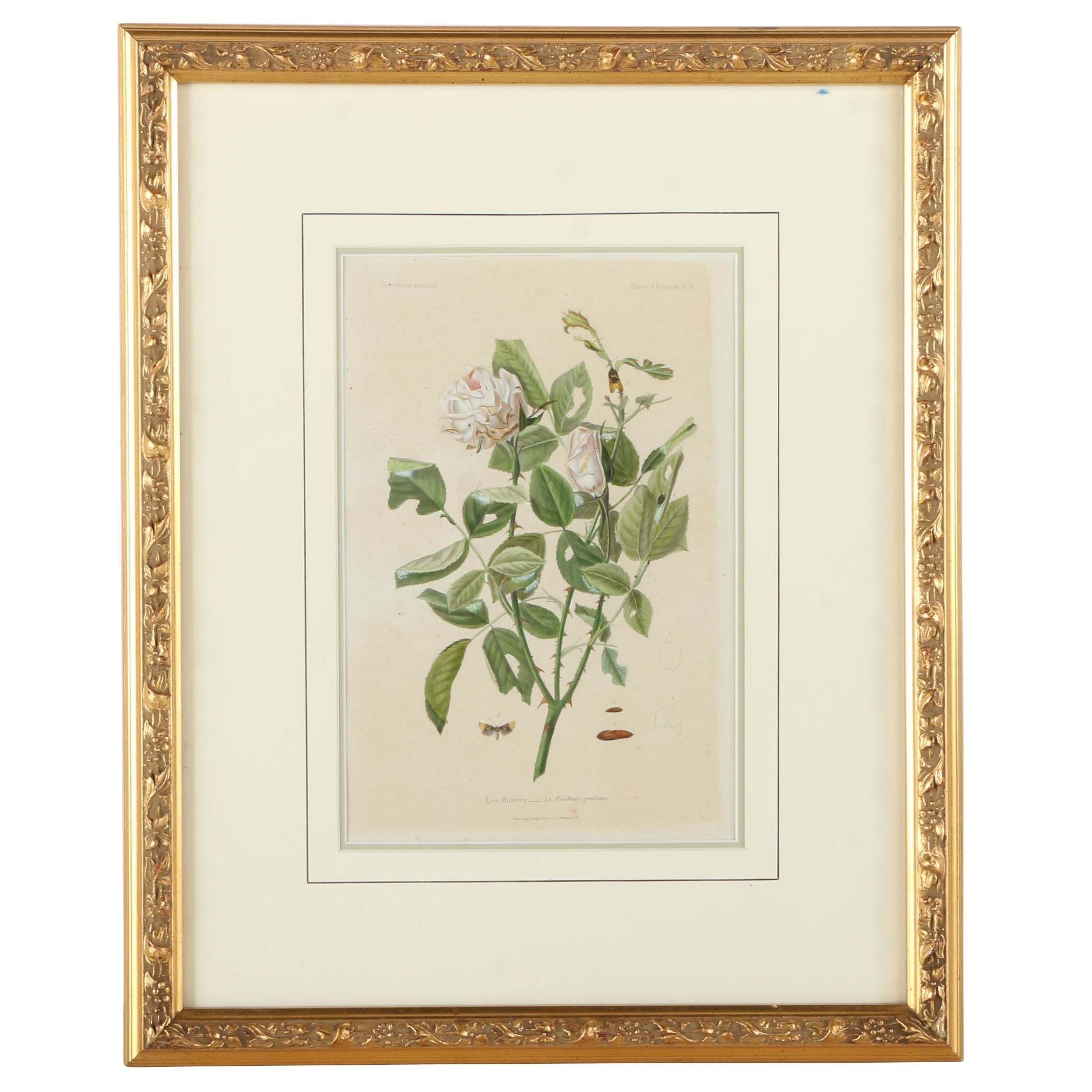 """Offset Lithograph on Paper After an Engraving """"Les Rosiers"""""""