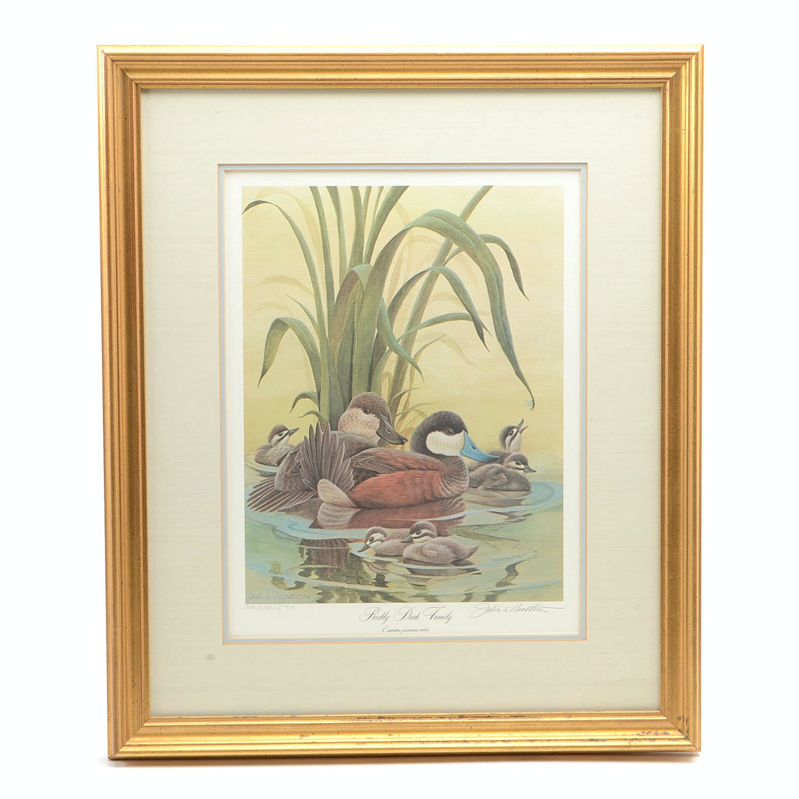 "John Ruthven Limited Edition Artist Proof Offset Lithograph ""Ruddy Duck Family"""