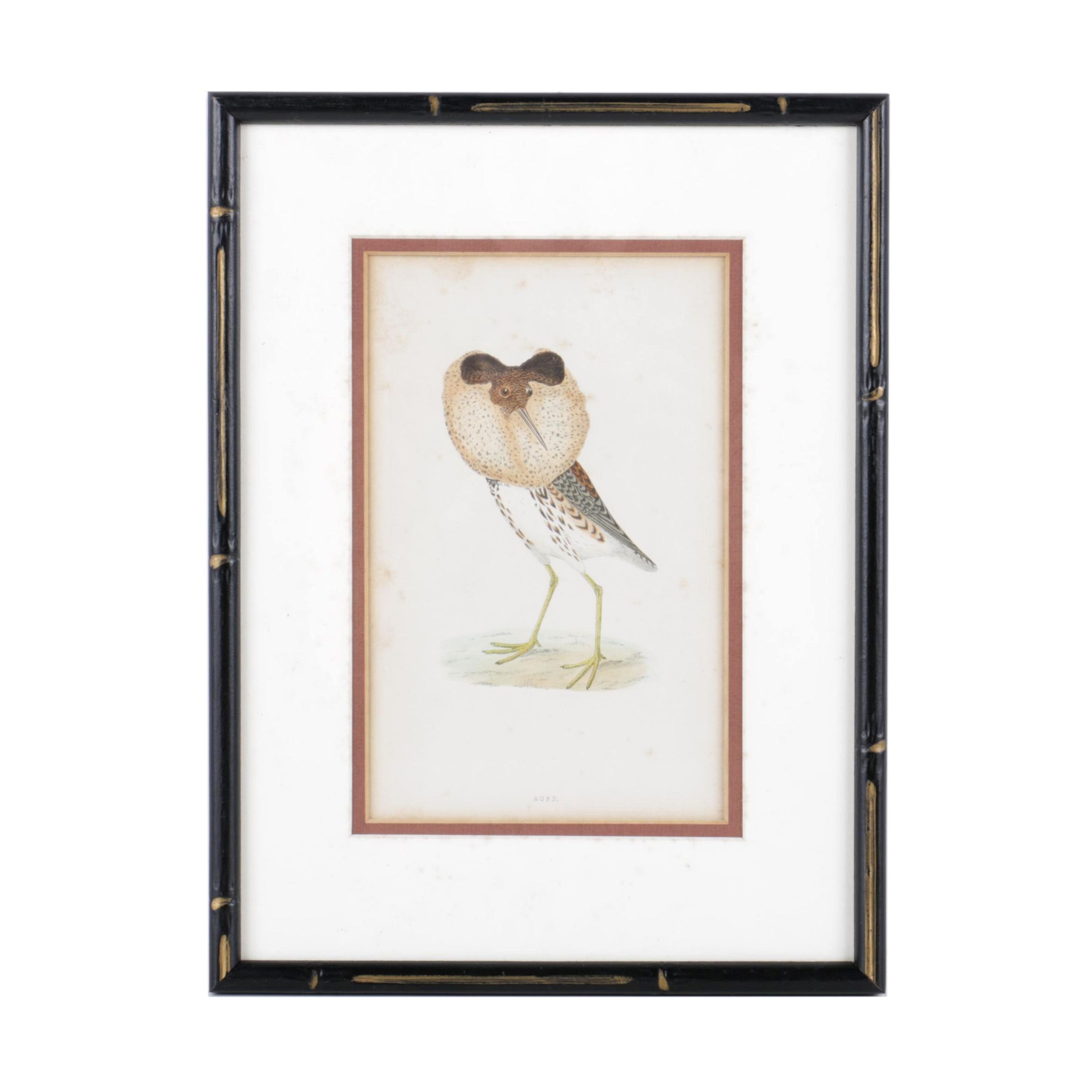 """Lithograph After """"Ruff"""" Engraving from Morris's """"The History of British Birds"""""""